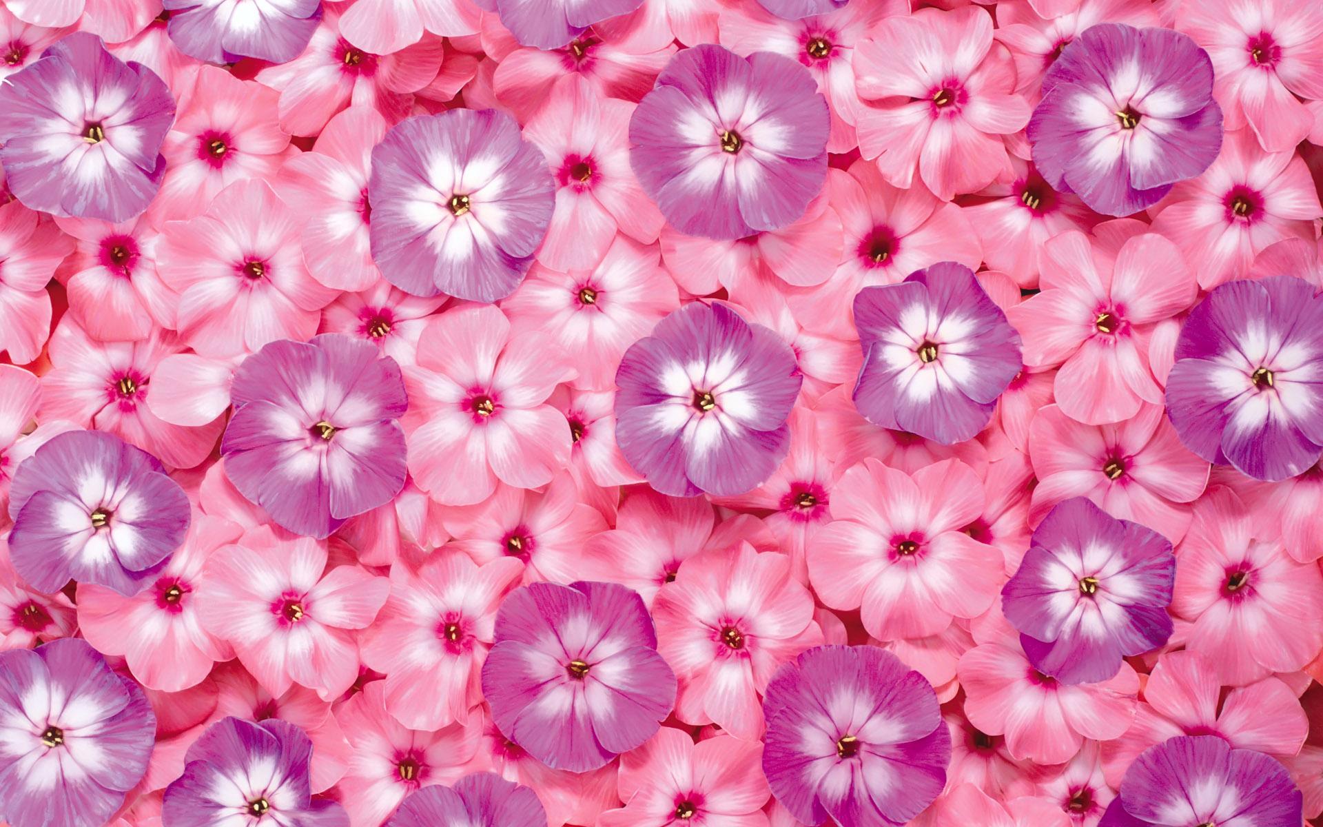 Букеты  красивые фото и картинки лучших букетов цветов