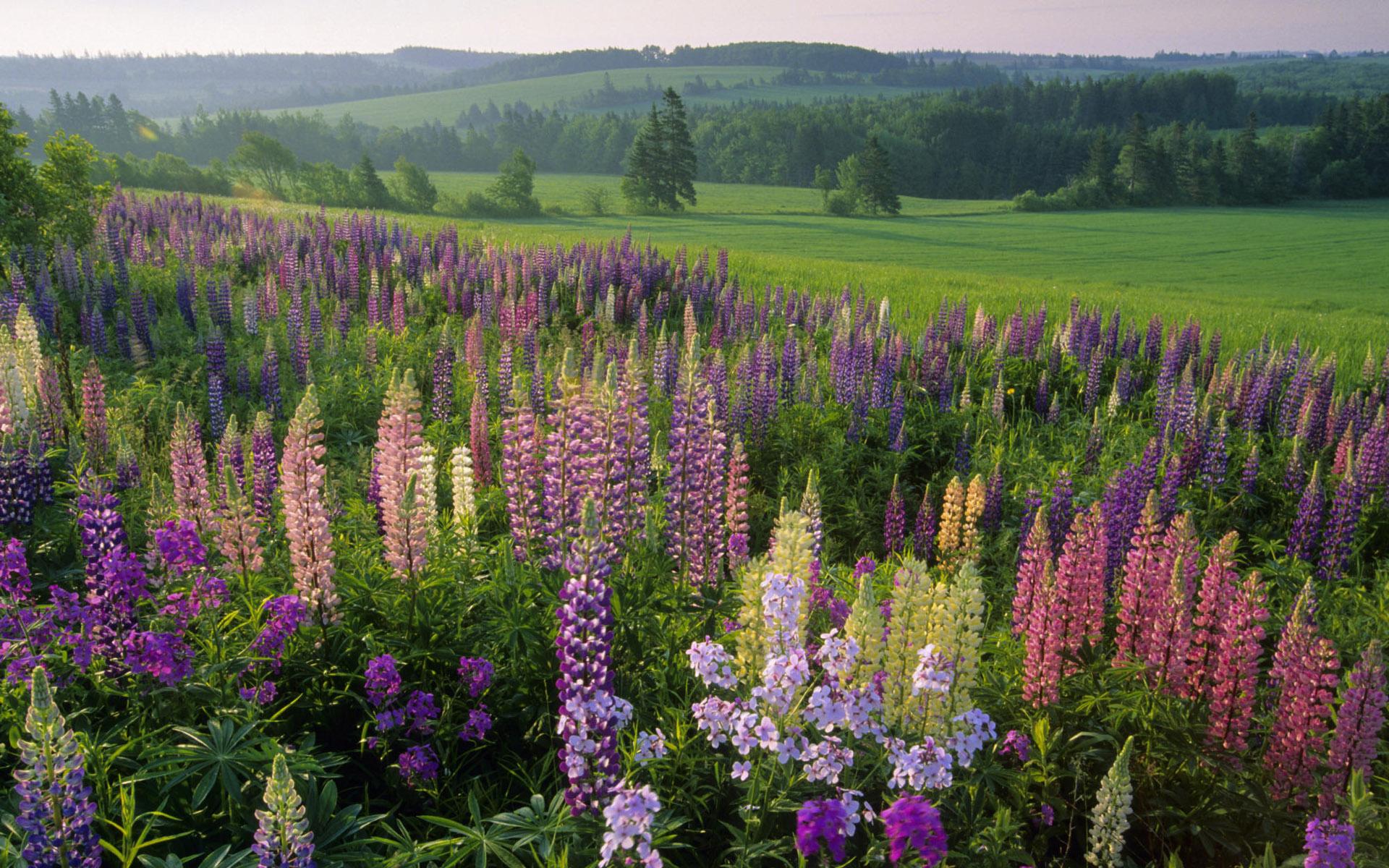 цветы лес зелень лето загрузить
