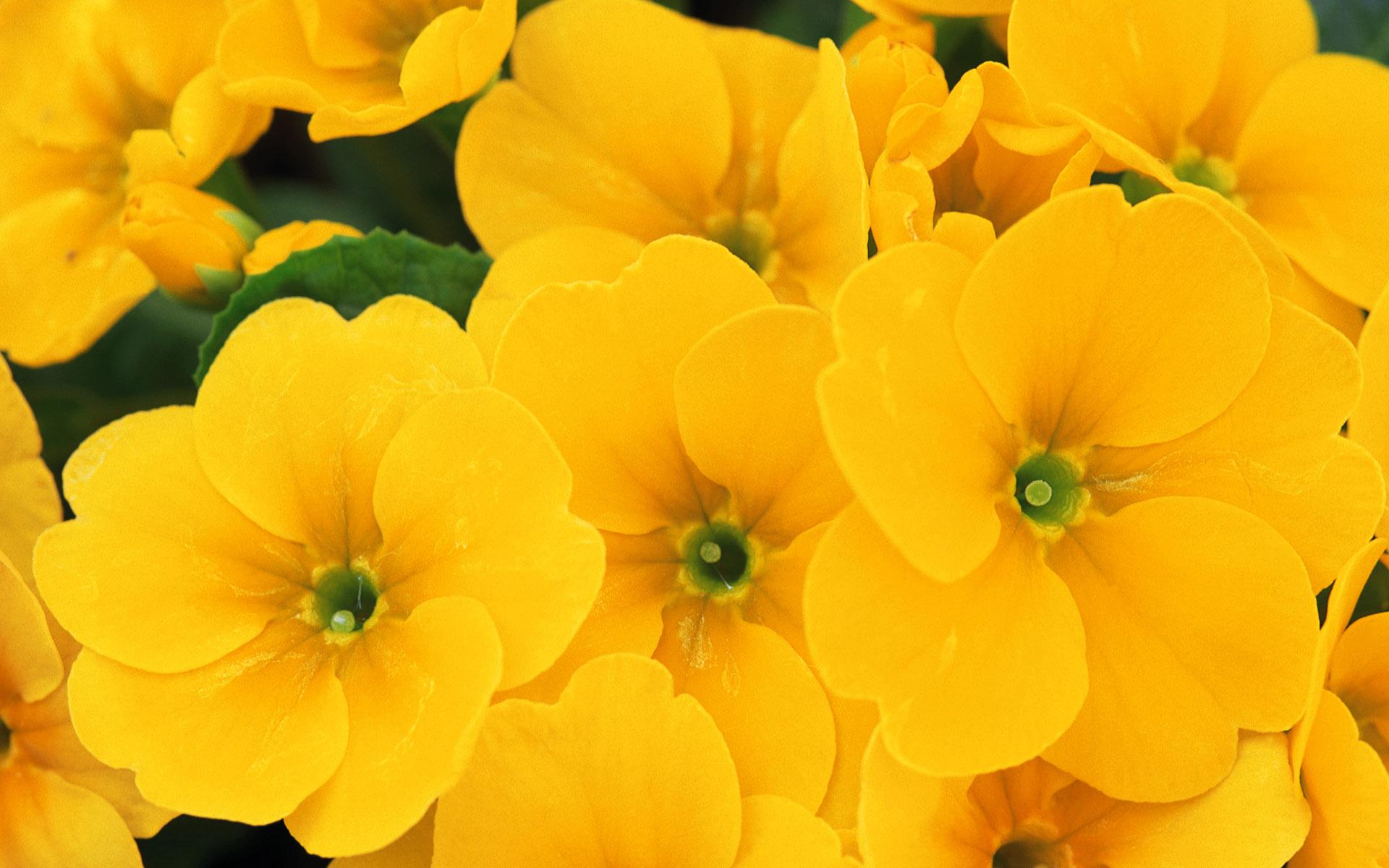 Ярко желтые цветы фото