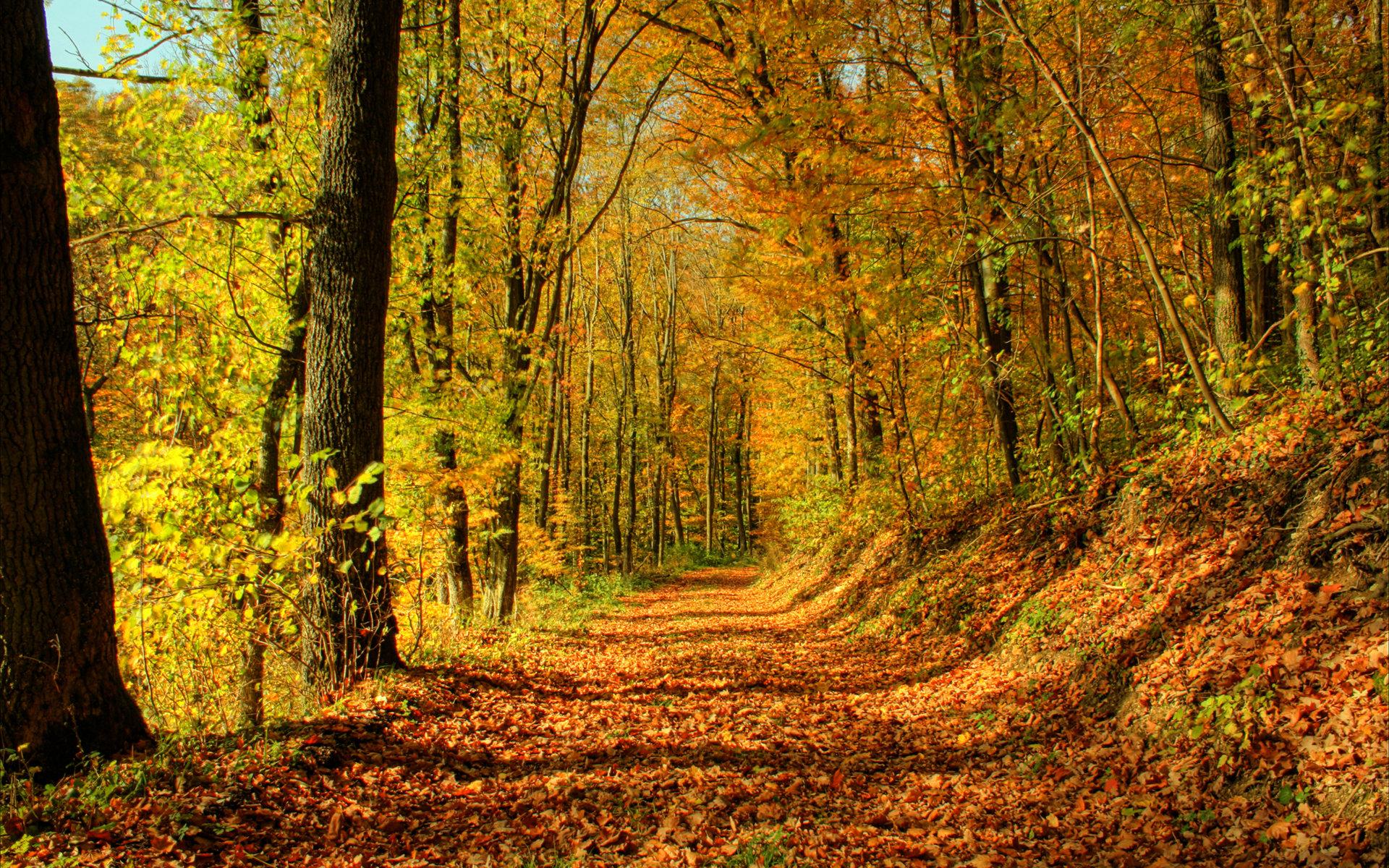 Осень на пороге бесплатно
