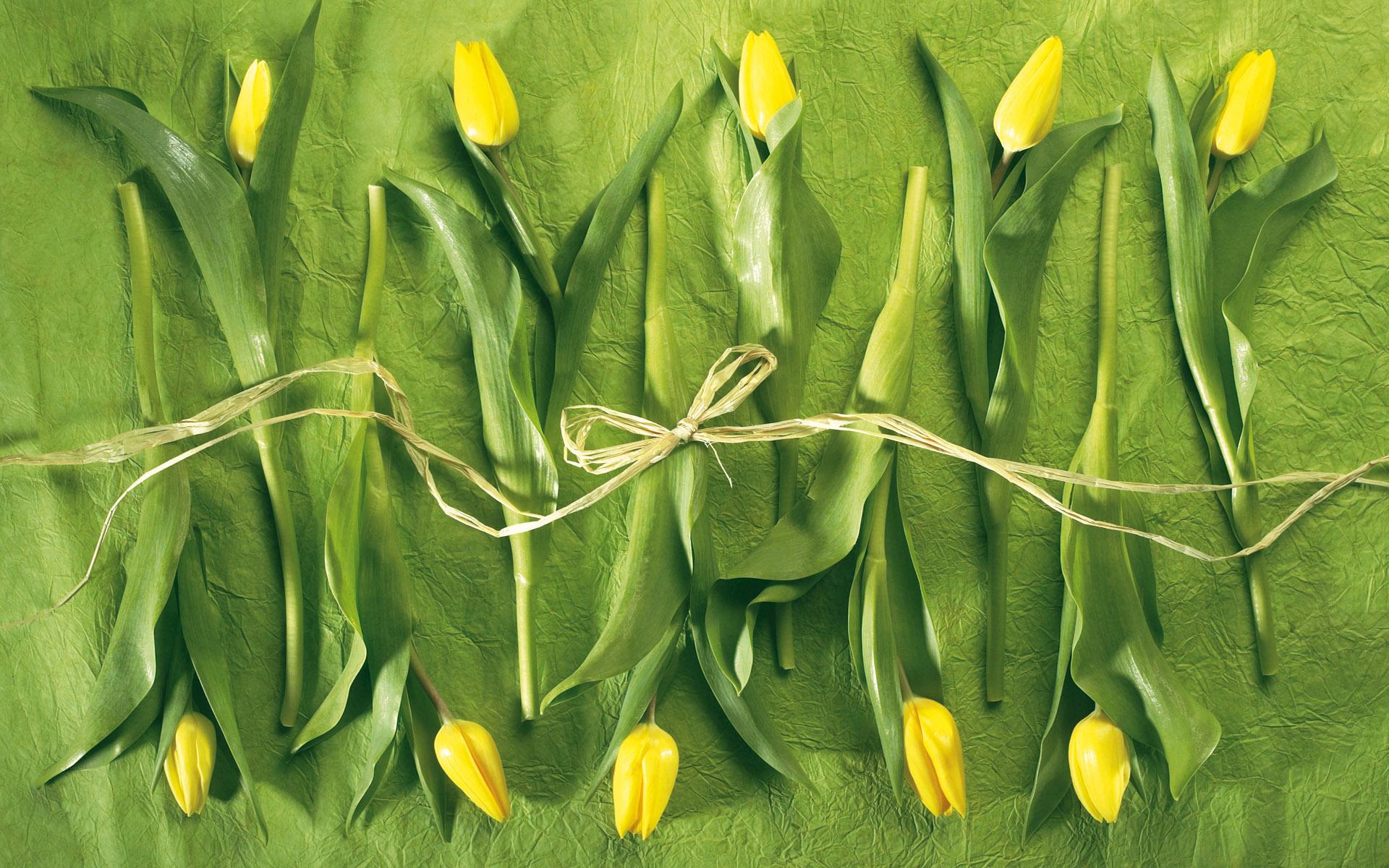 постеры с зелеными тюльпанами исследуется земельный надел