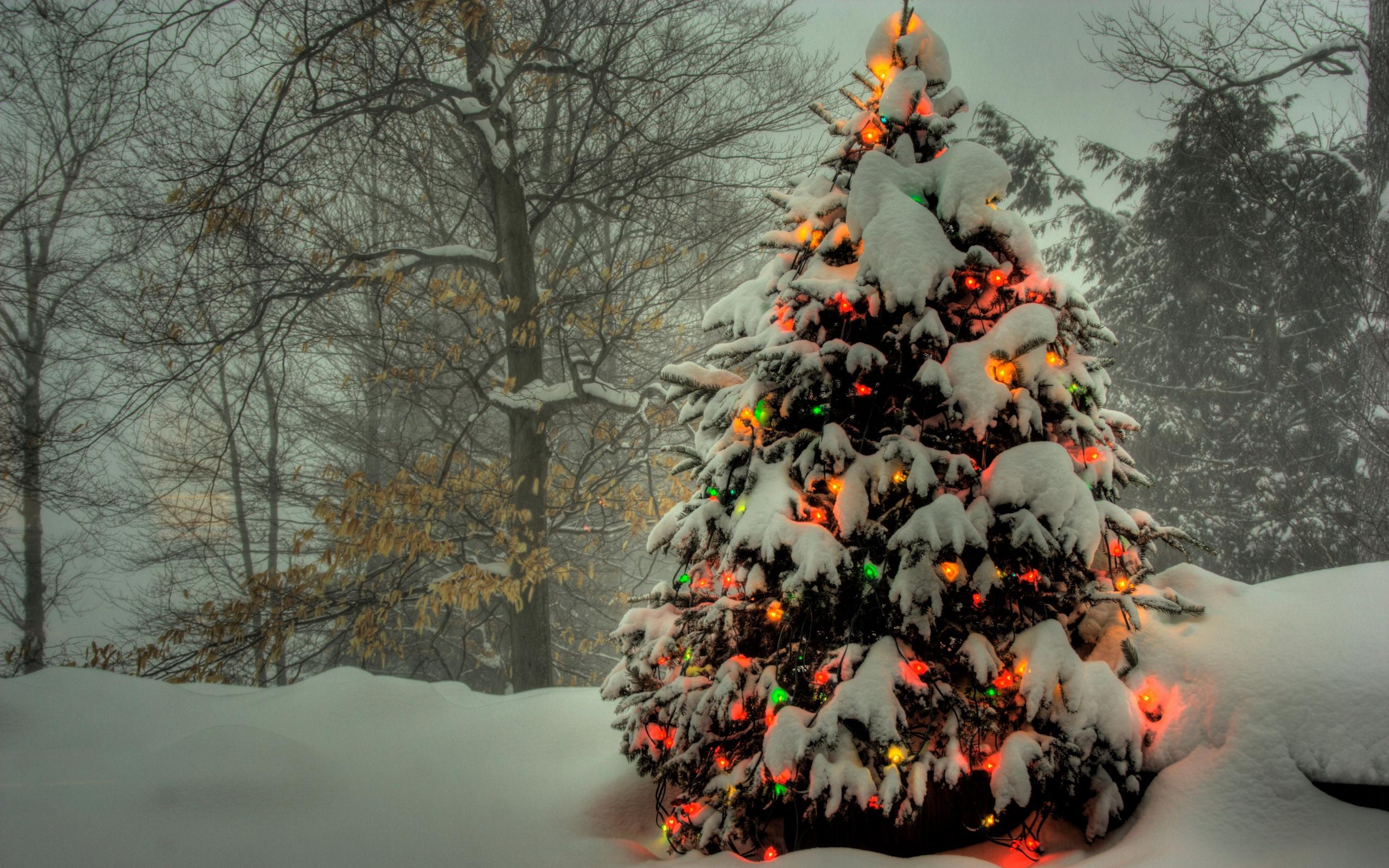 Три новогодние ели  № 1417098 загрузить