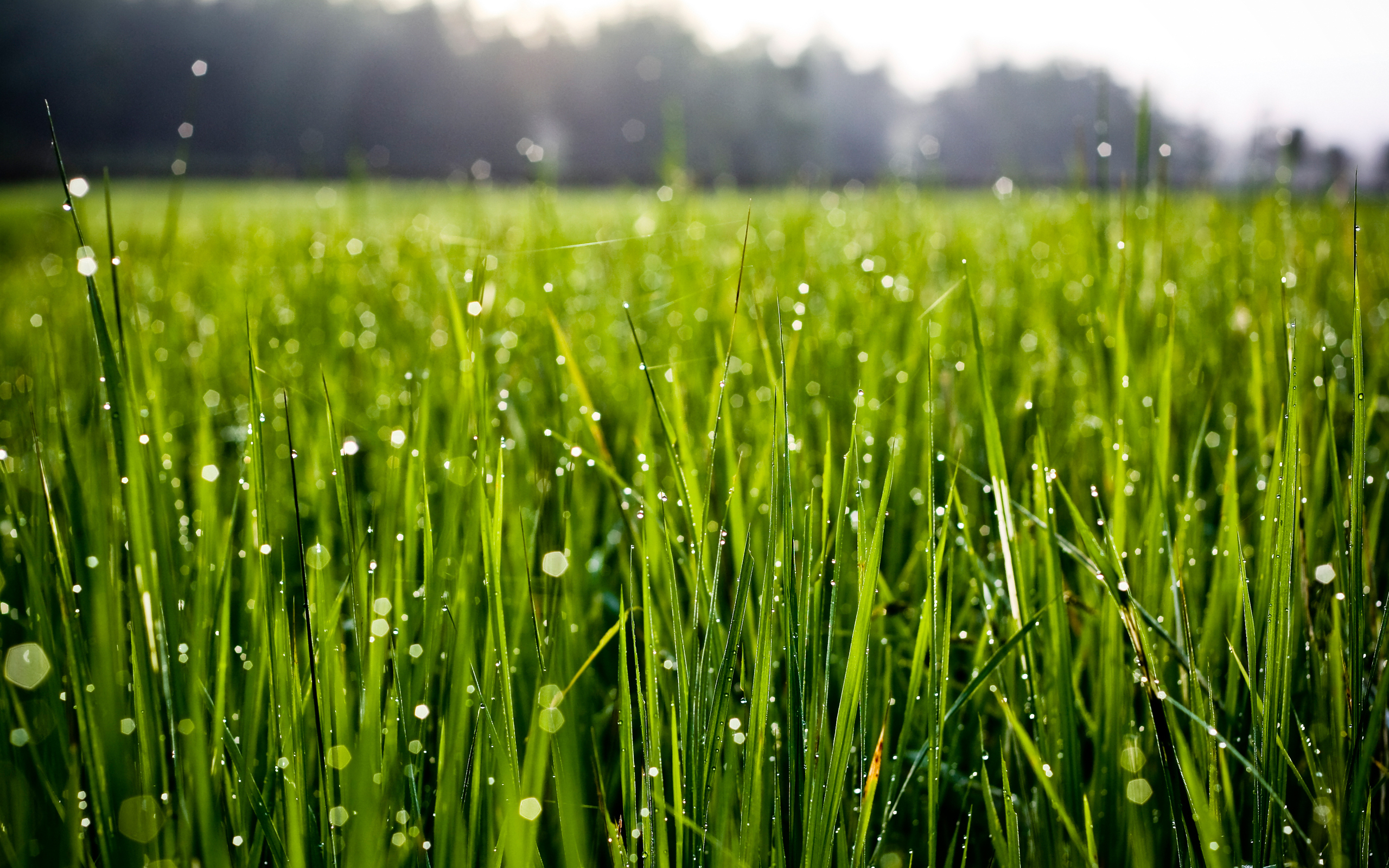 Трава в каплях без смс