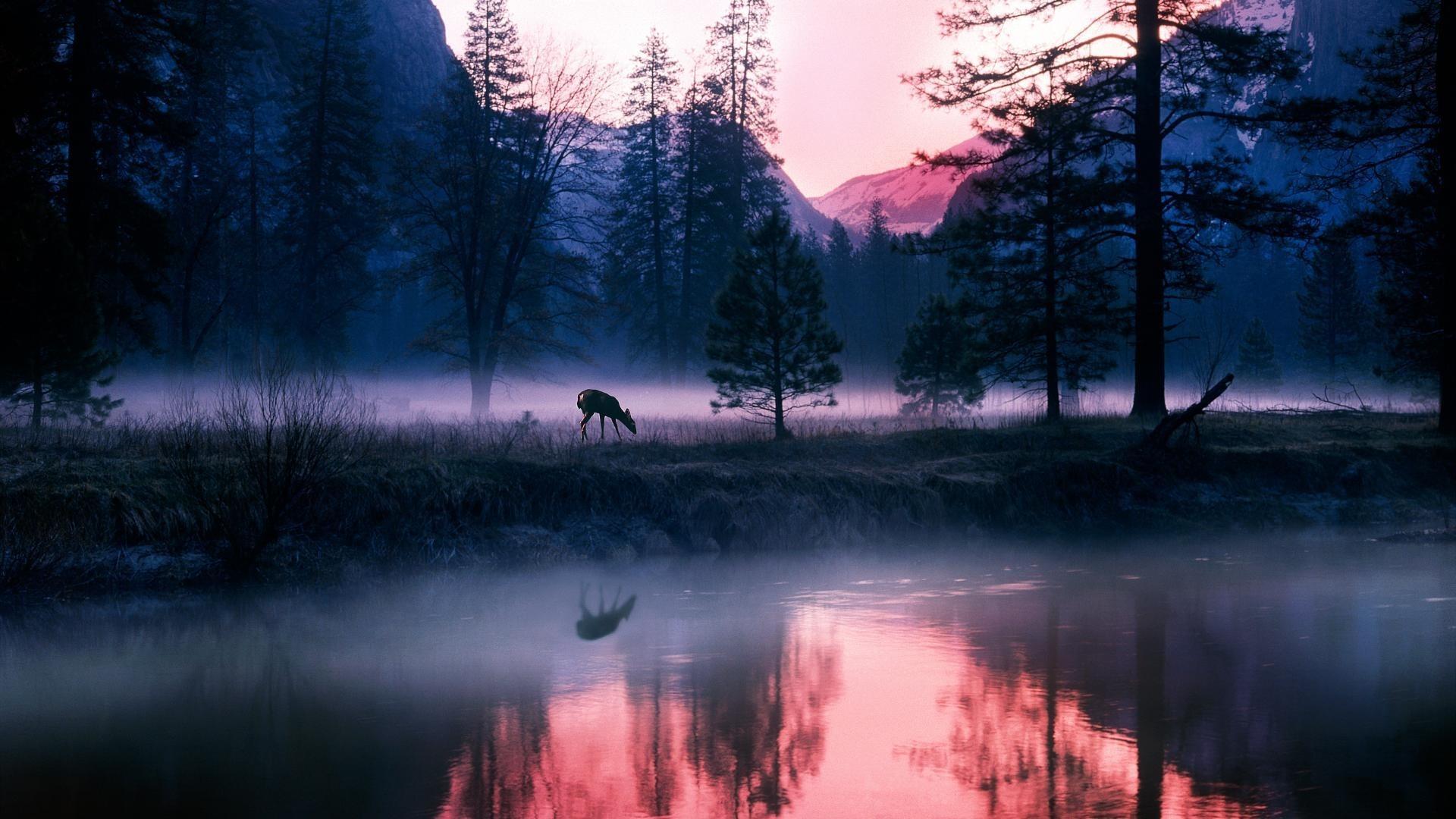 Закат в тумане в лесу онлайн