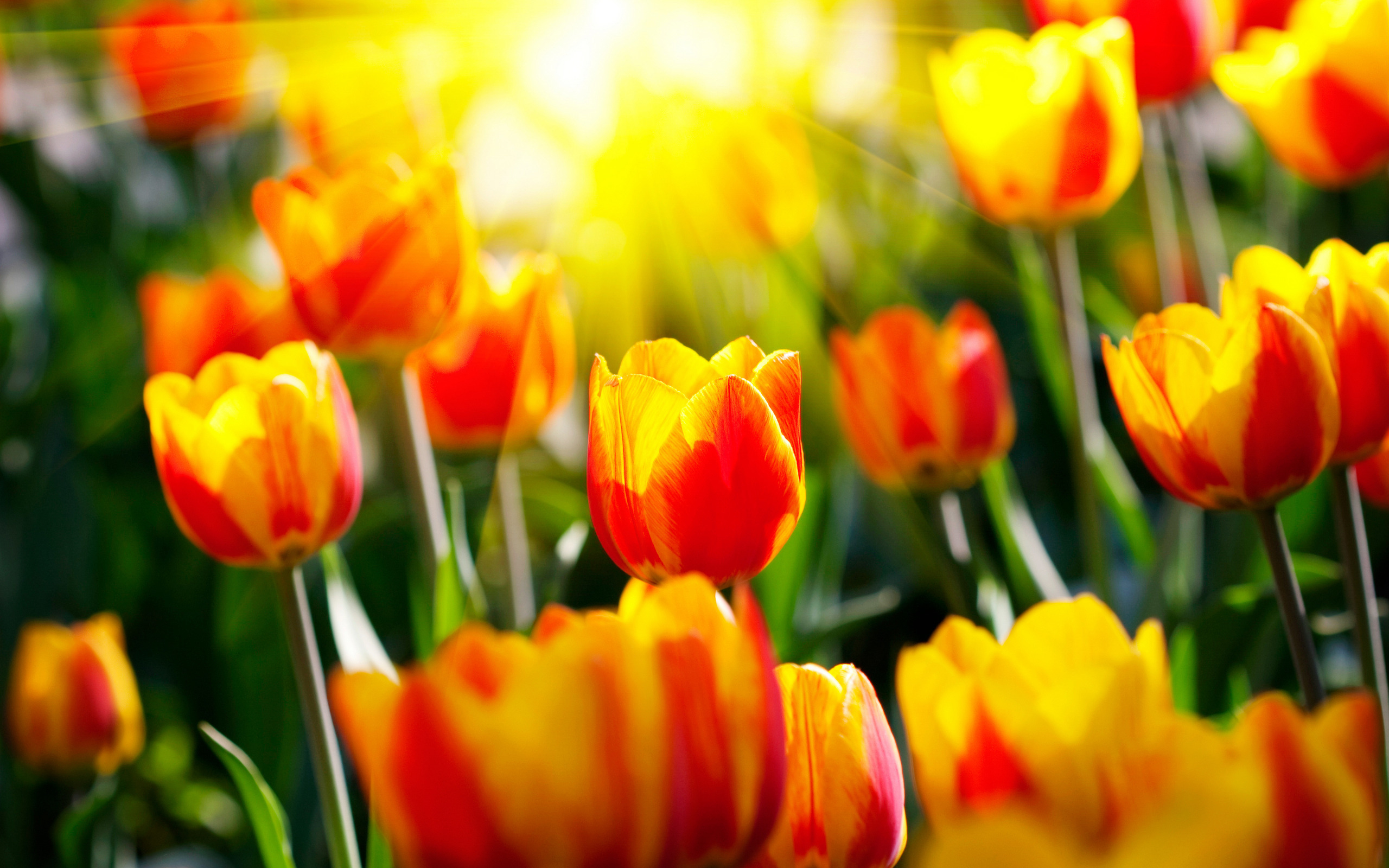 Открытка весна цветы