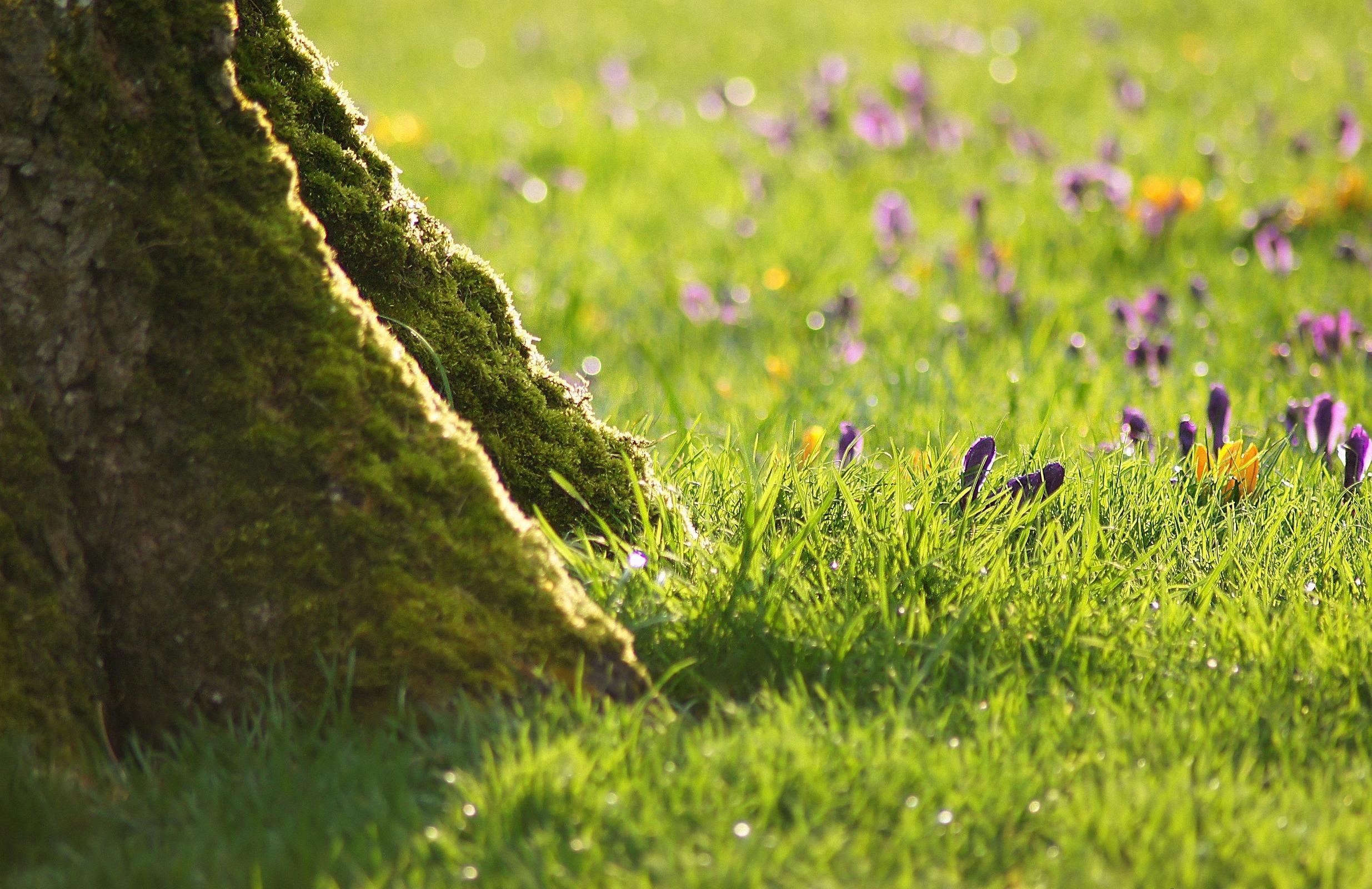 природа вода река трава деревья мох  № 3800955  скачать