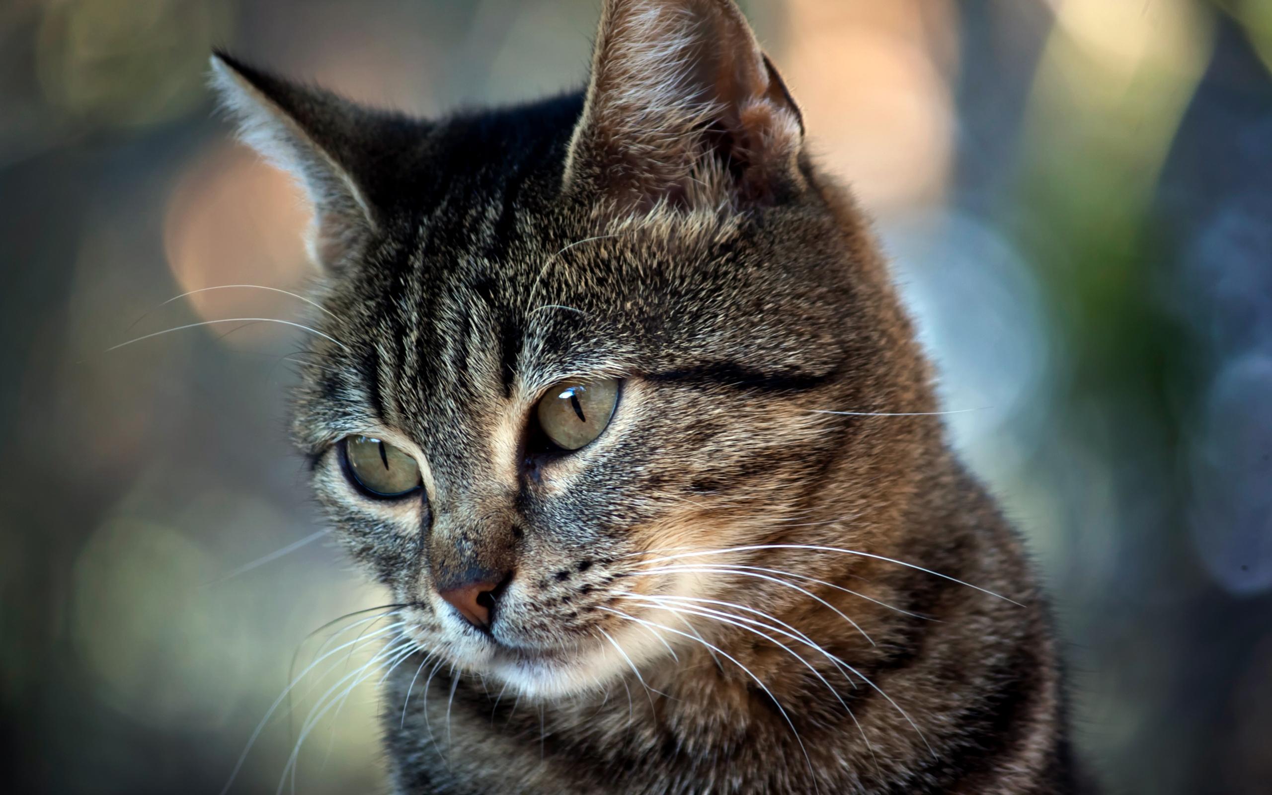 картинки прикольные кошки большое разрешение студенческие годы занимался