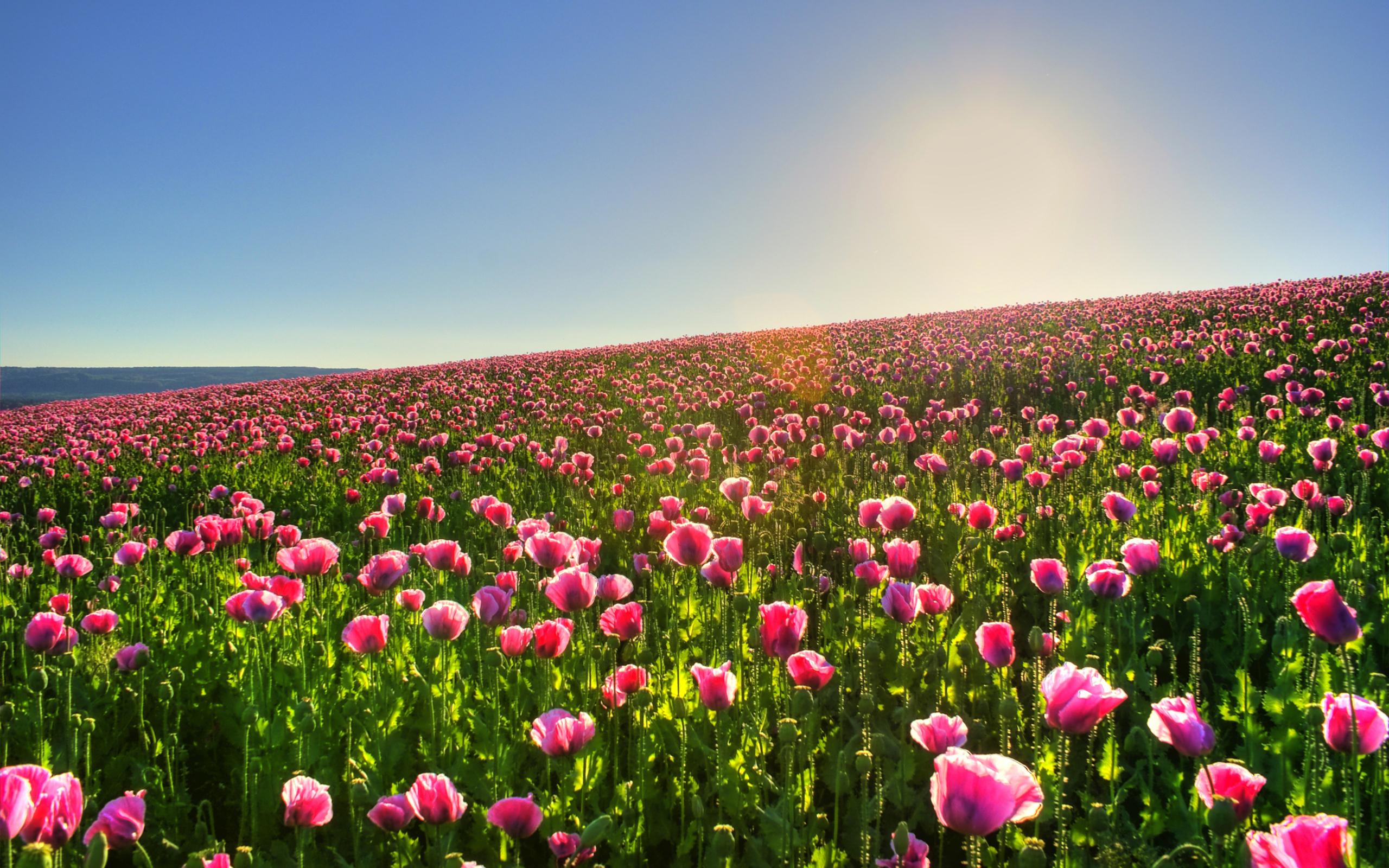 Albero dei tulipani foto 47