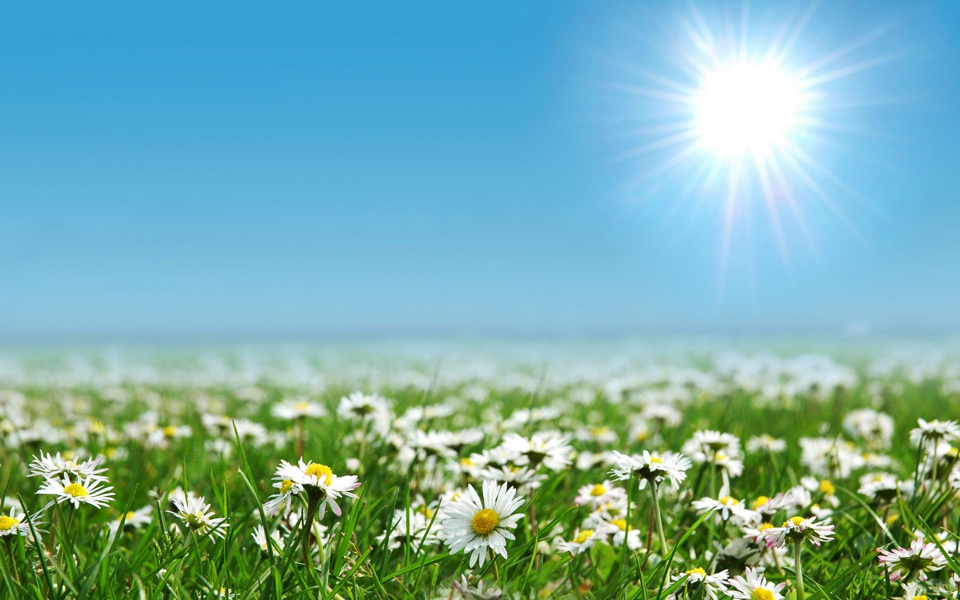солнце лужайка березы  № 2741883 загрузить