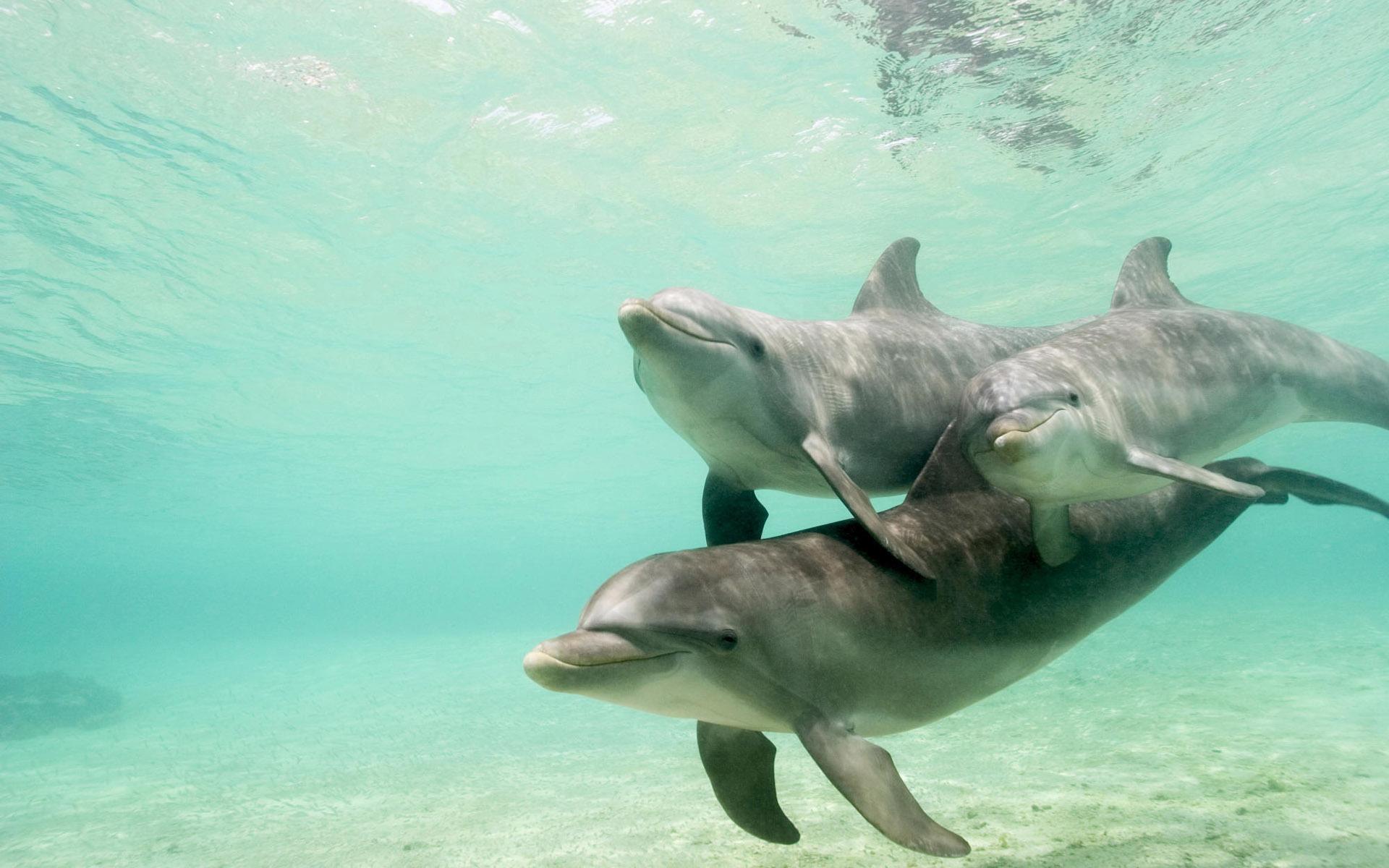 статуя мальчик с дельфином загрузить