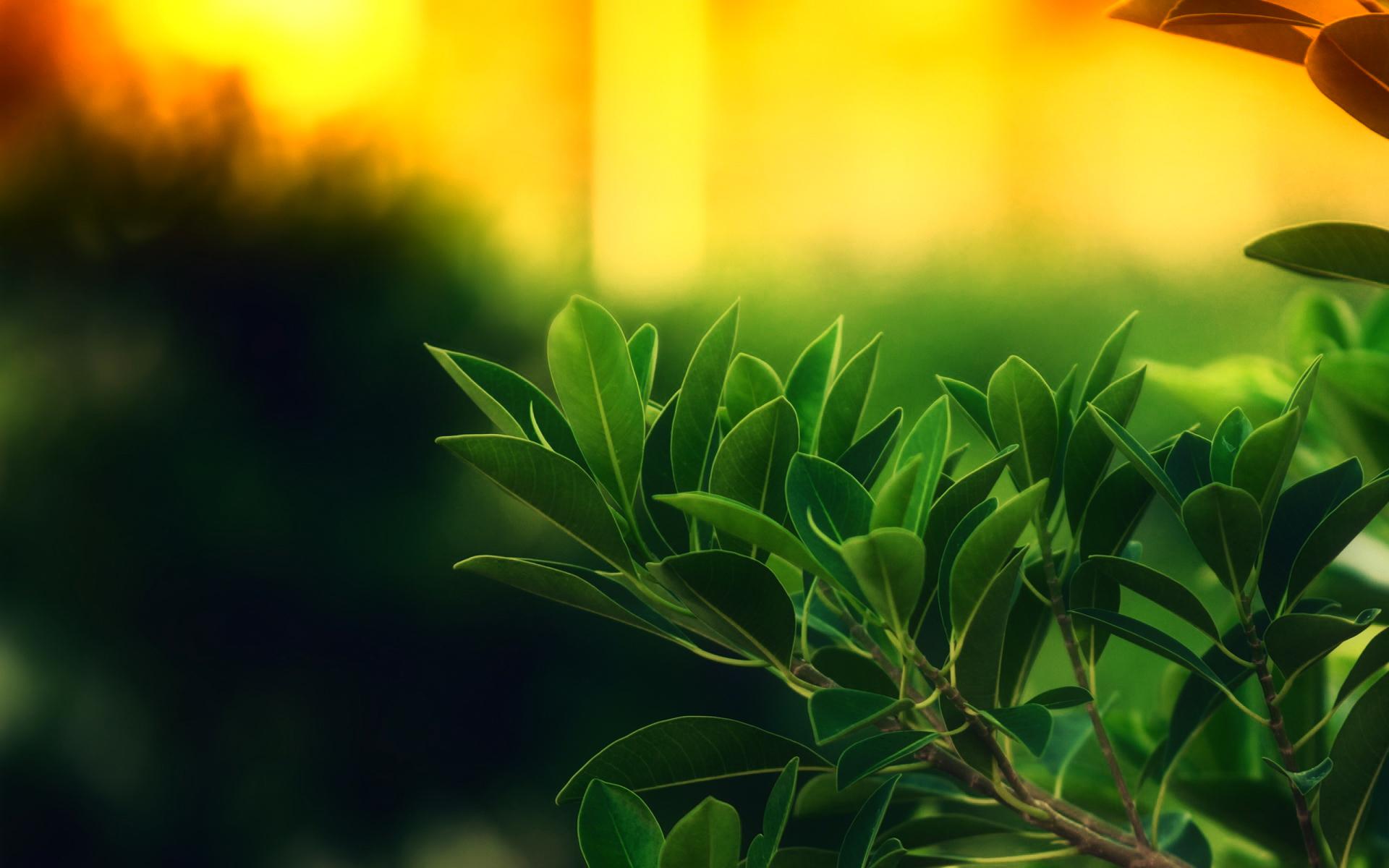 4 фото 1 слово деревья листья травы цветы