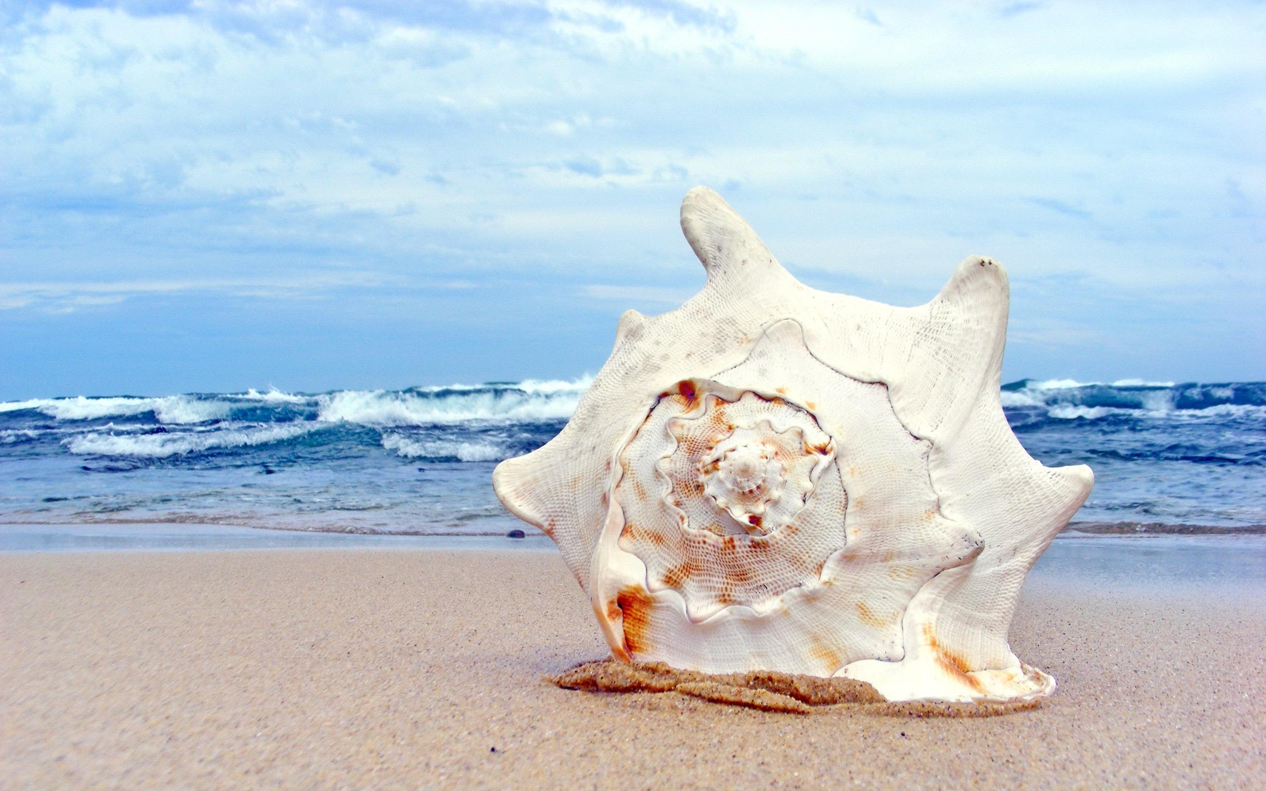 Картинки ракушек на море, психолога для