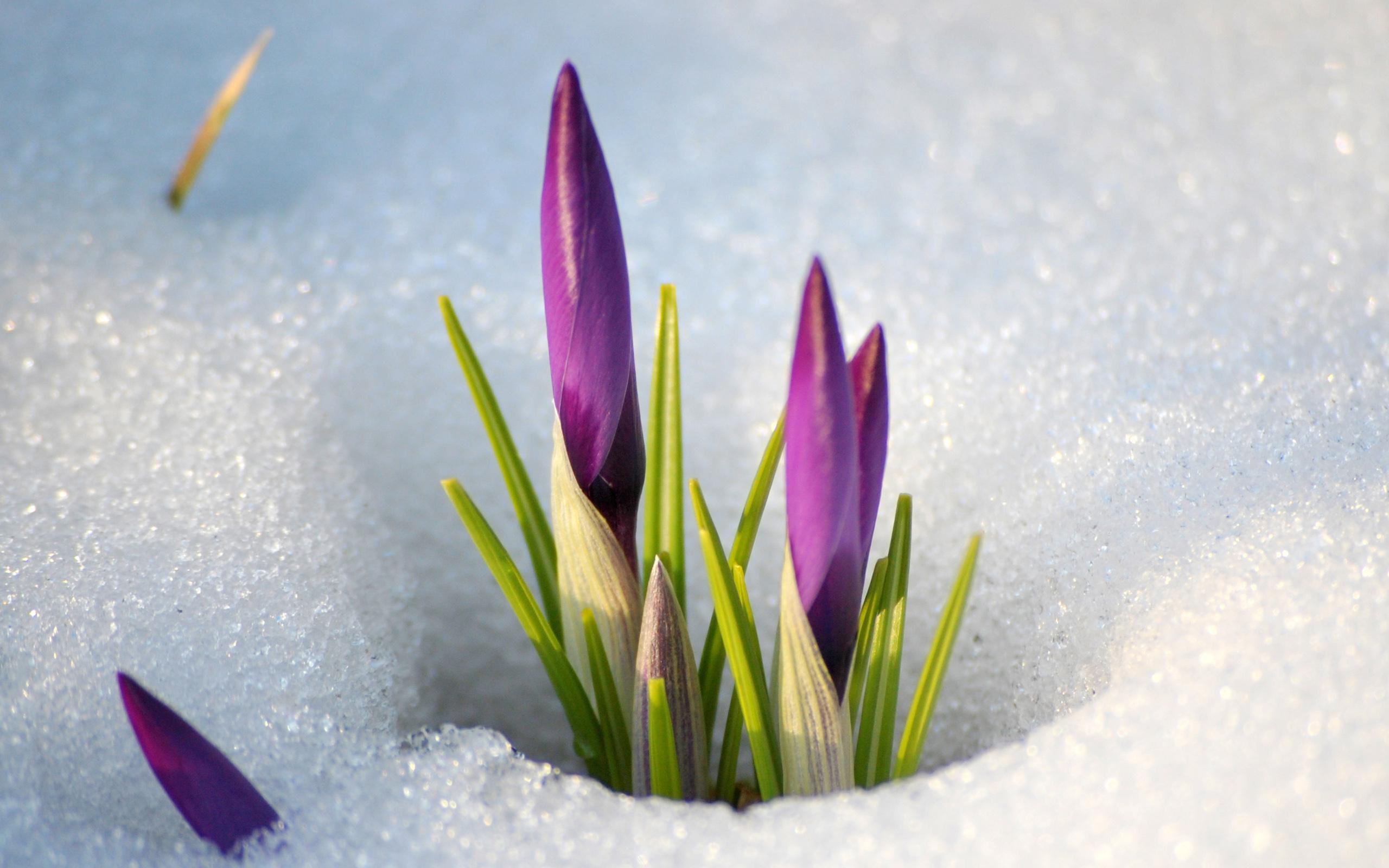 Картинки о начале весны красивые, надписями люблю
