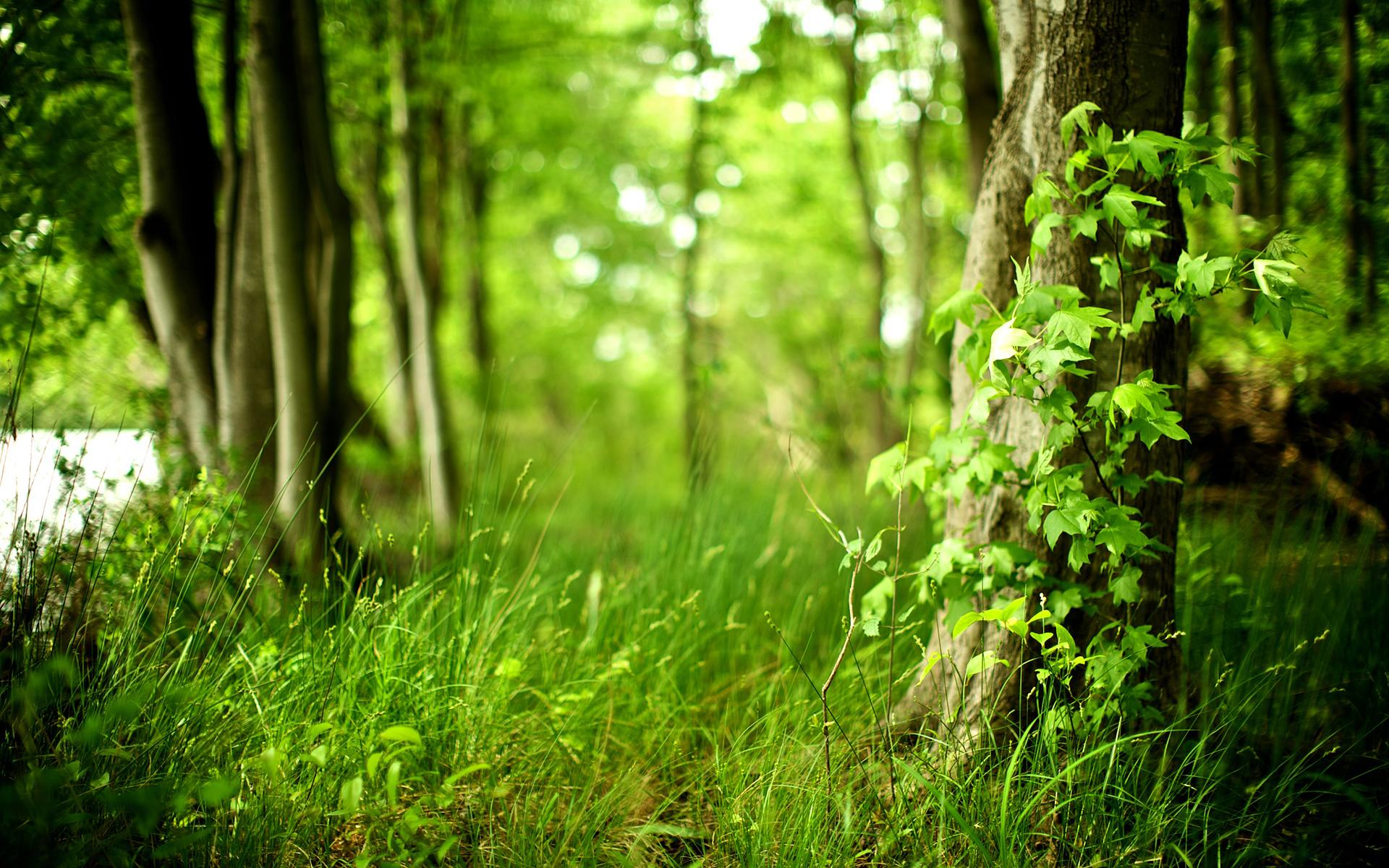 фото на фоне леса - 6