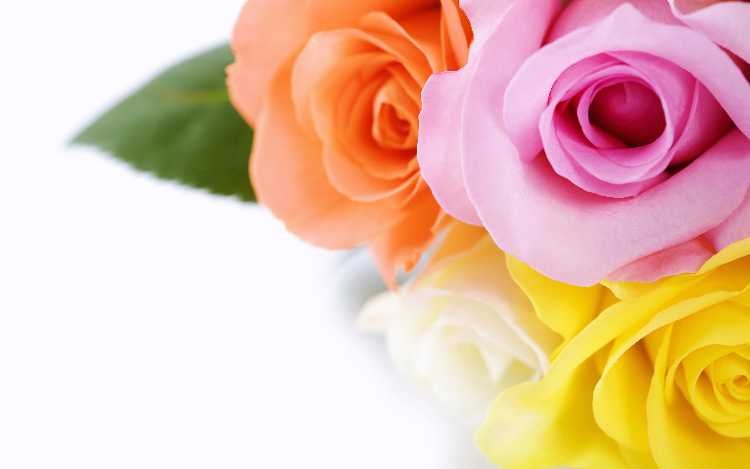 Очаровашка с розой бесплатно