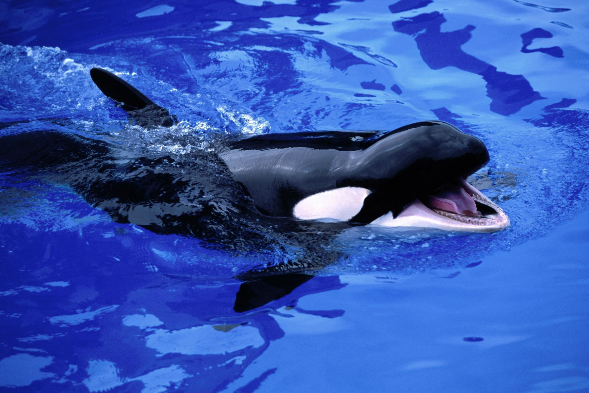 Все киты мира фото с названием