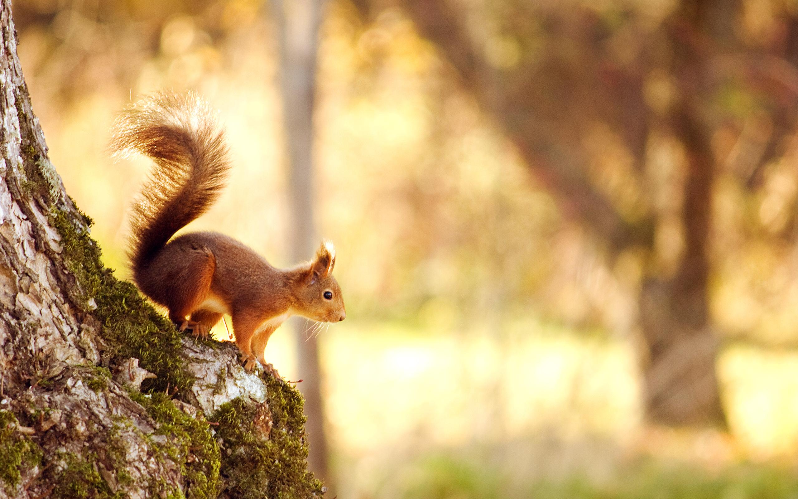 Картинки про природу прикольные, открытка