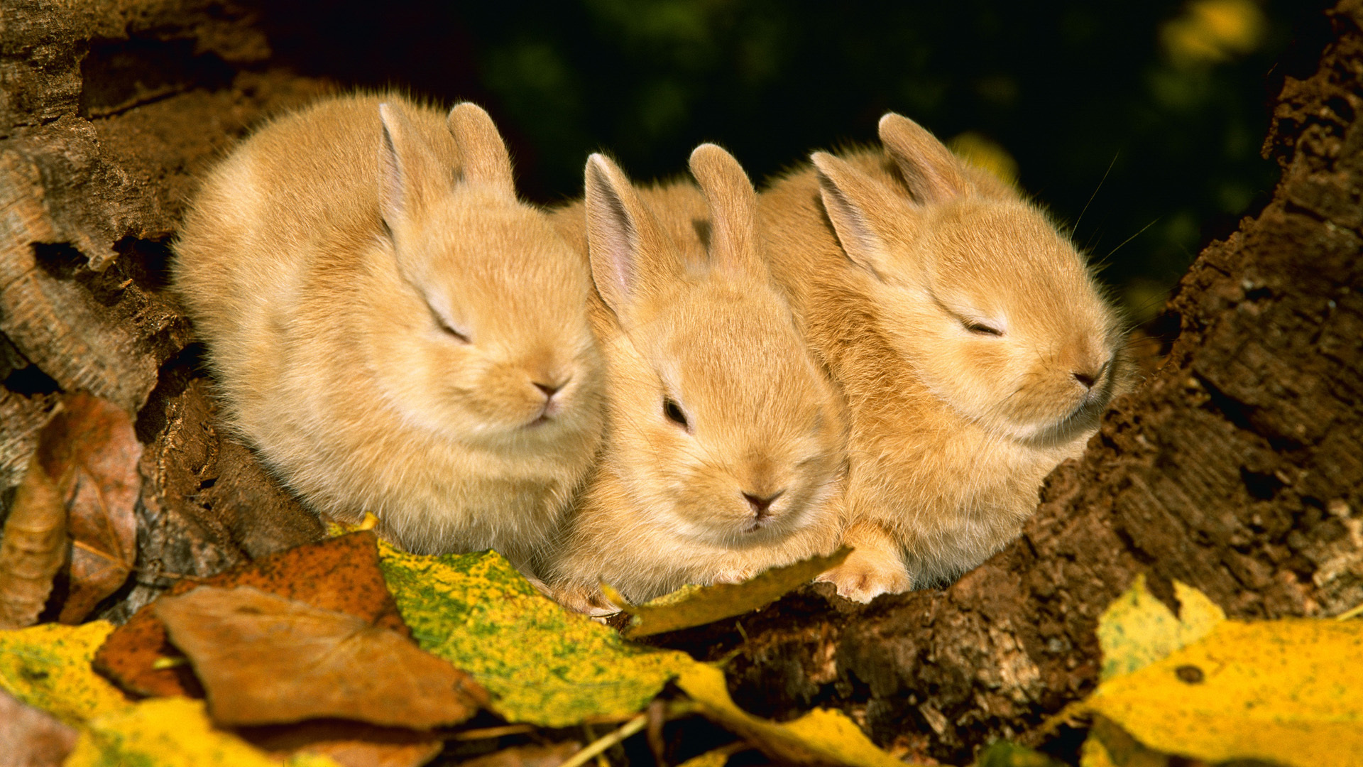 кролик девушка природа животное бесплатно