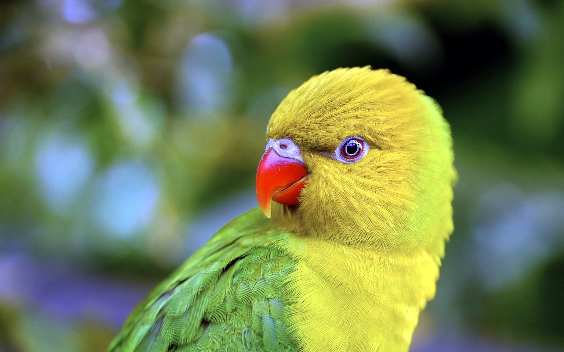 природа животные птицы попугаи  № 103542 загрузить