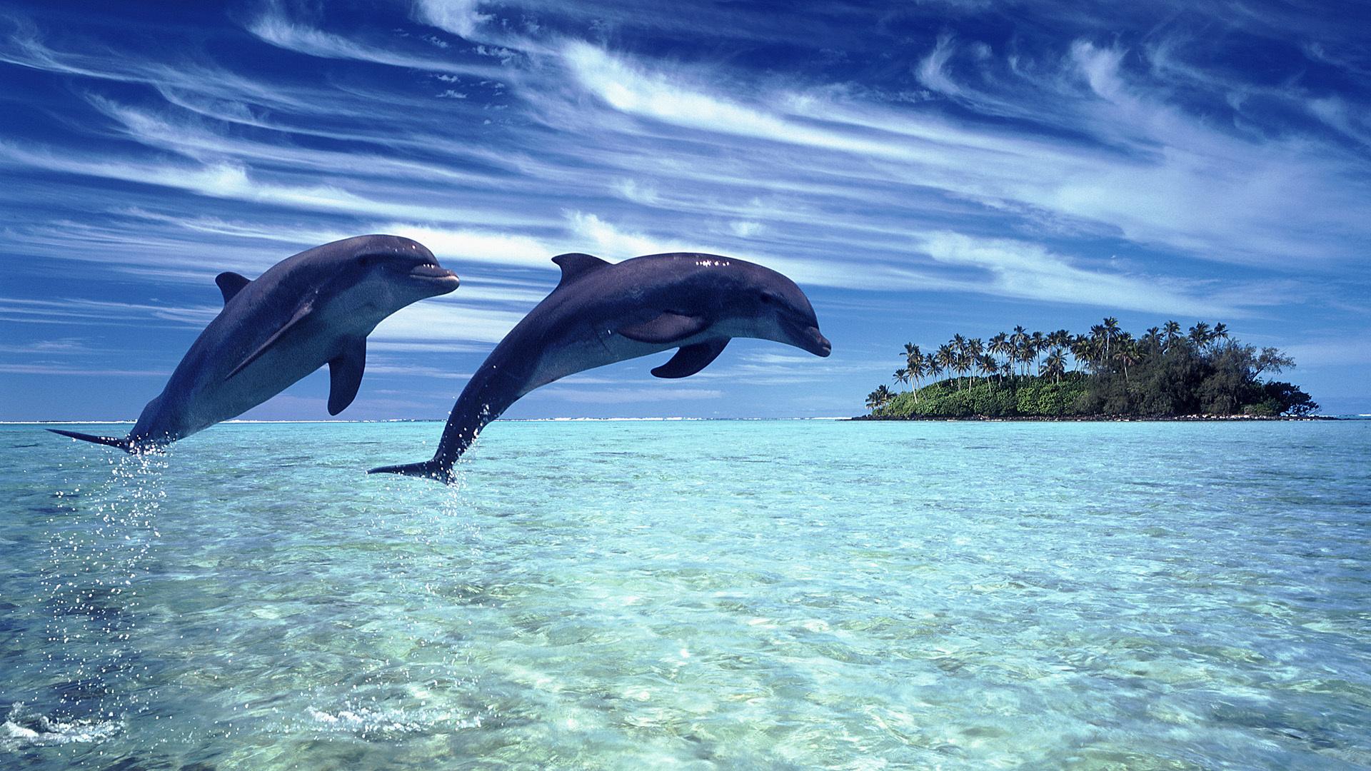 природа животные дельфины море на телефон