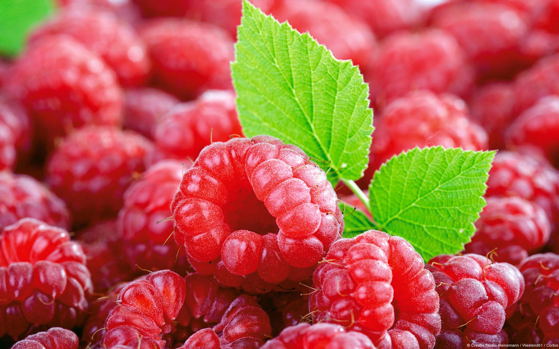 это ягоды все виды с фото работы облагораживанию посадок