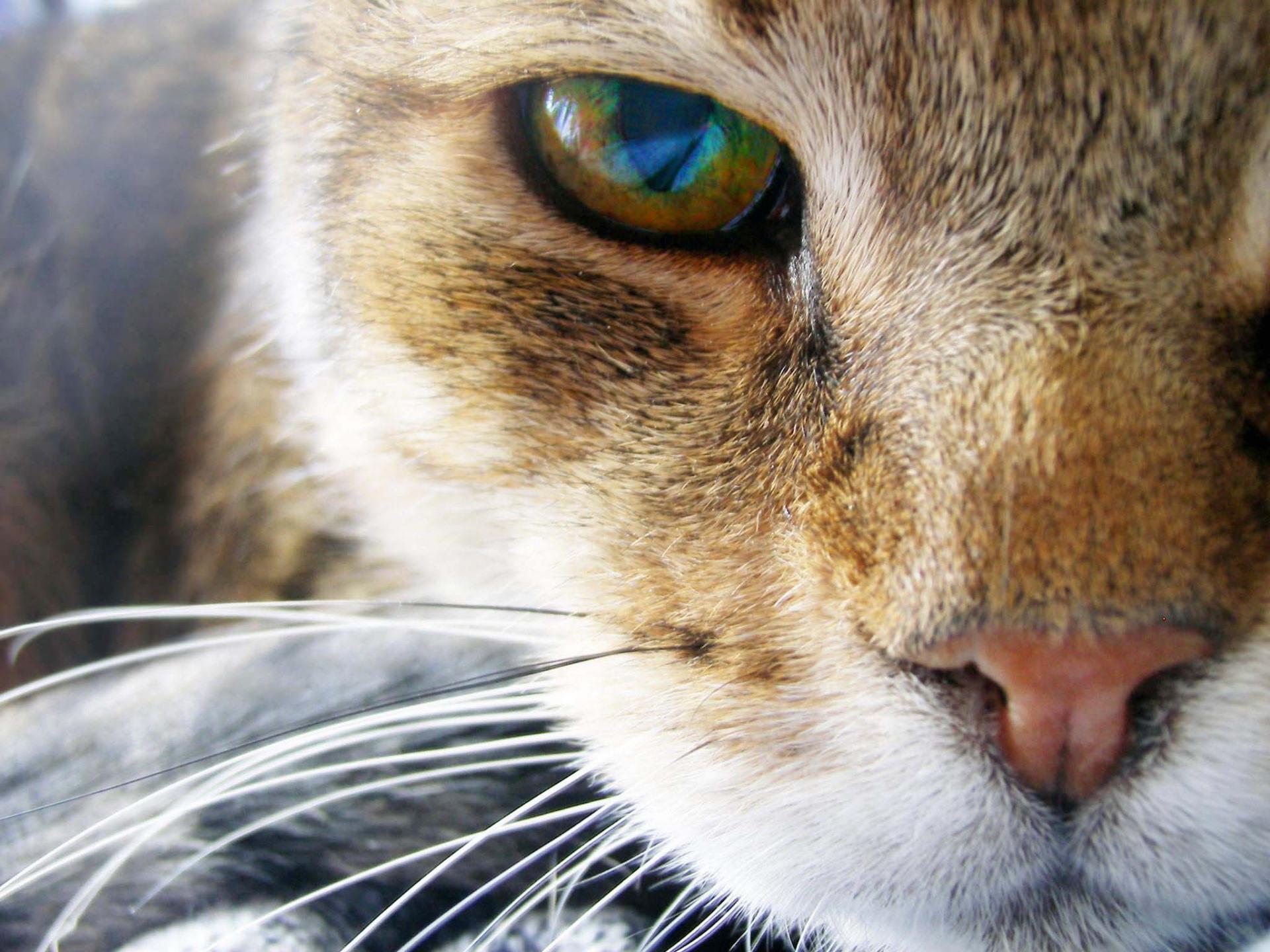 картинки кошачьего взгляда маски состоят