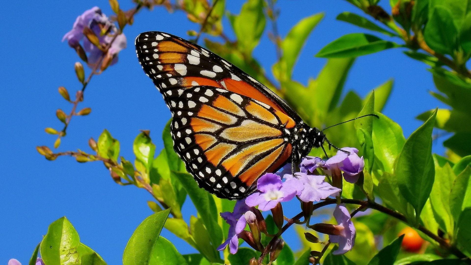 Разные бабочки  № 2033754 бесплатно
