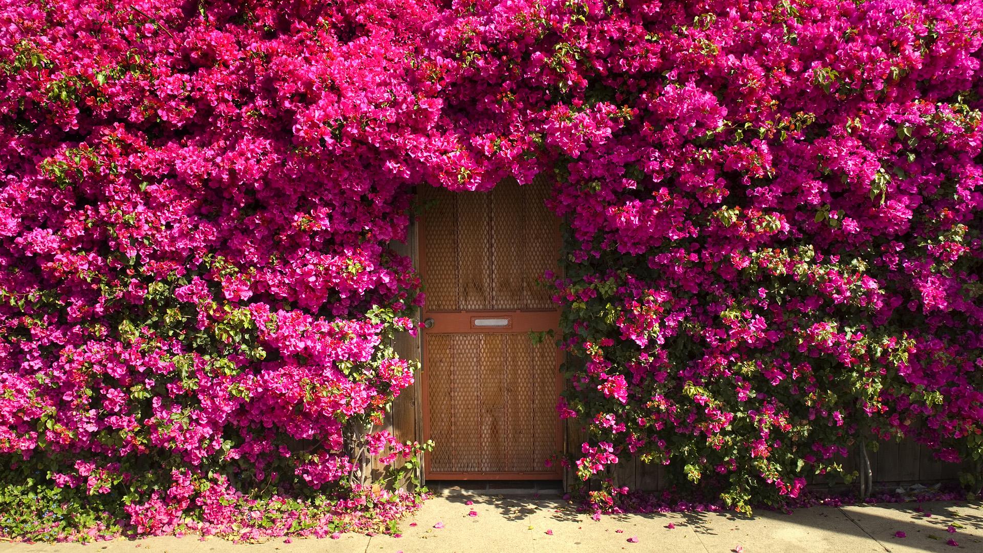 цветущие деревья во дворе  № 532086 бесплатно