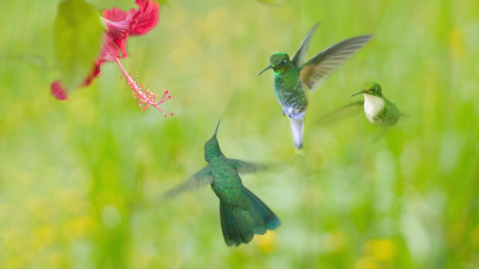 природа животные птицы цветы в хорошем качестве
