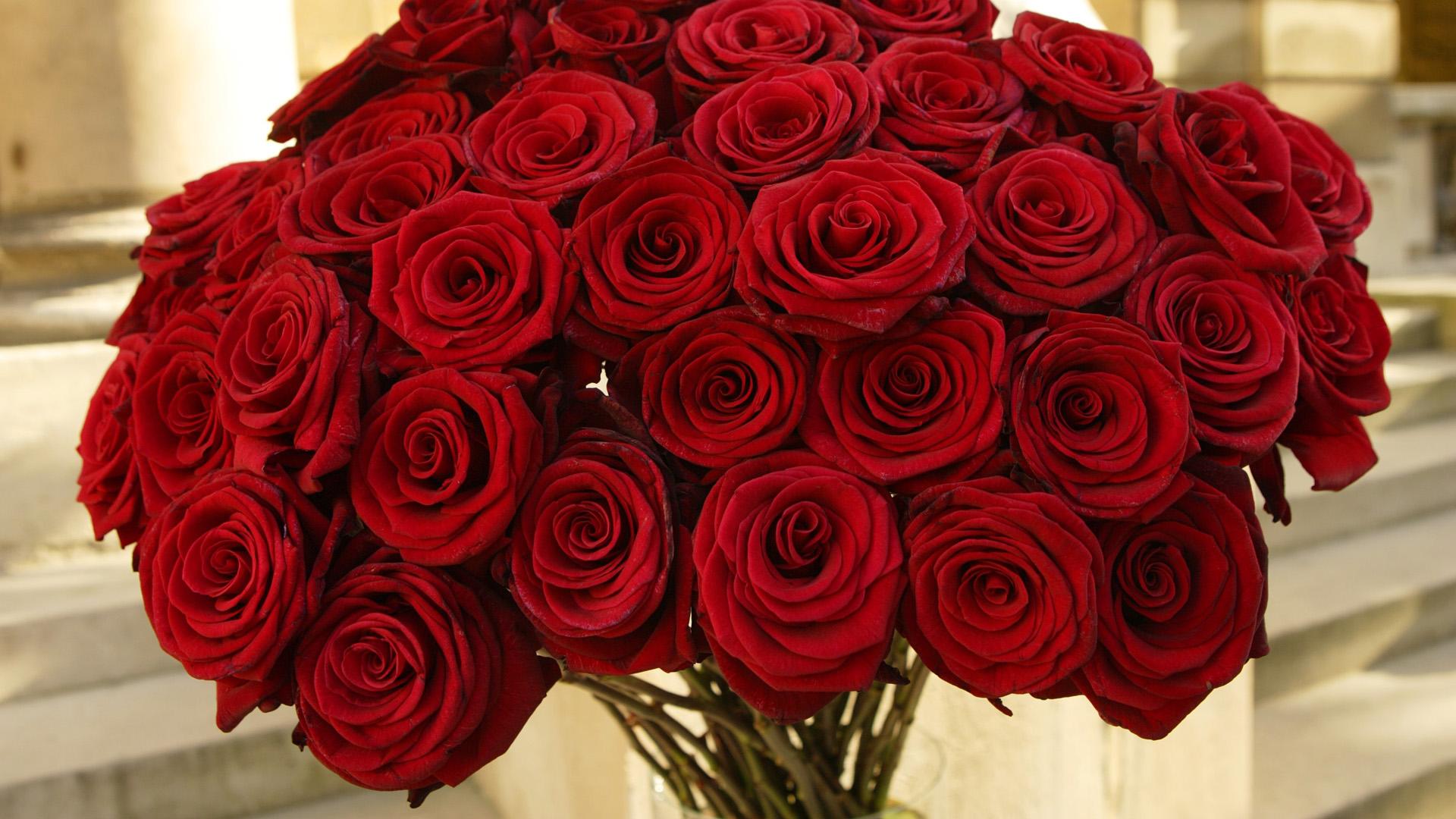 Роза цветок красный