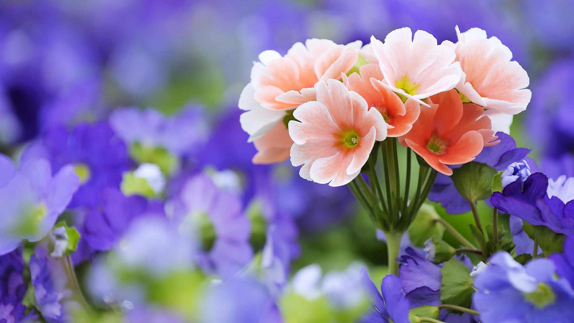 цветы полевые розовые без смс