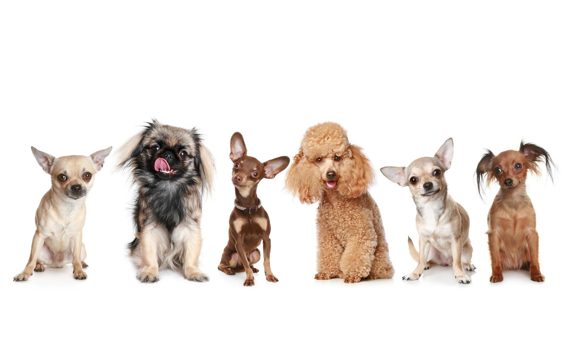 Обои собрание у собачек, разные для рабочего стола - картинка #35589