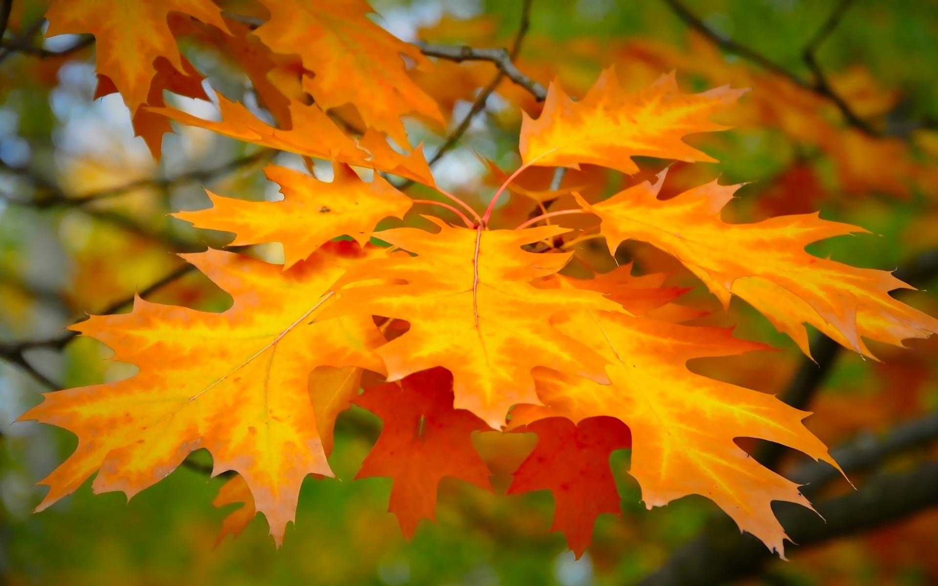 Открытка с листвой, картинки