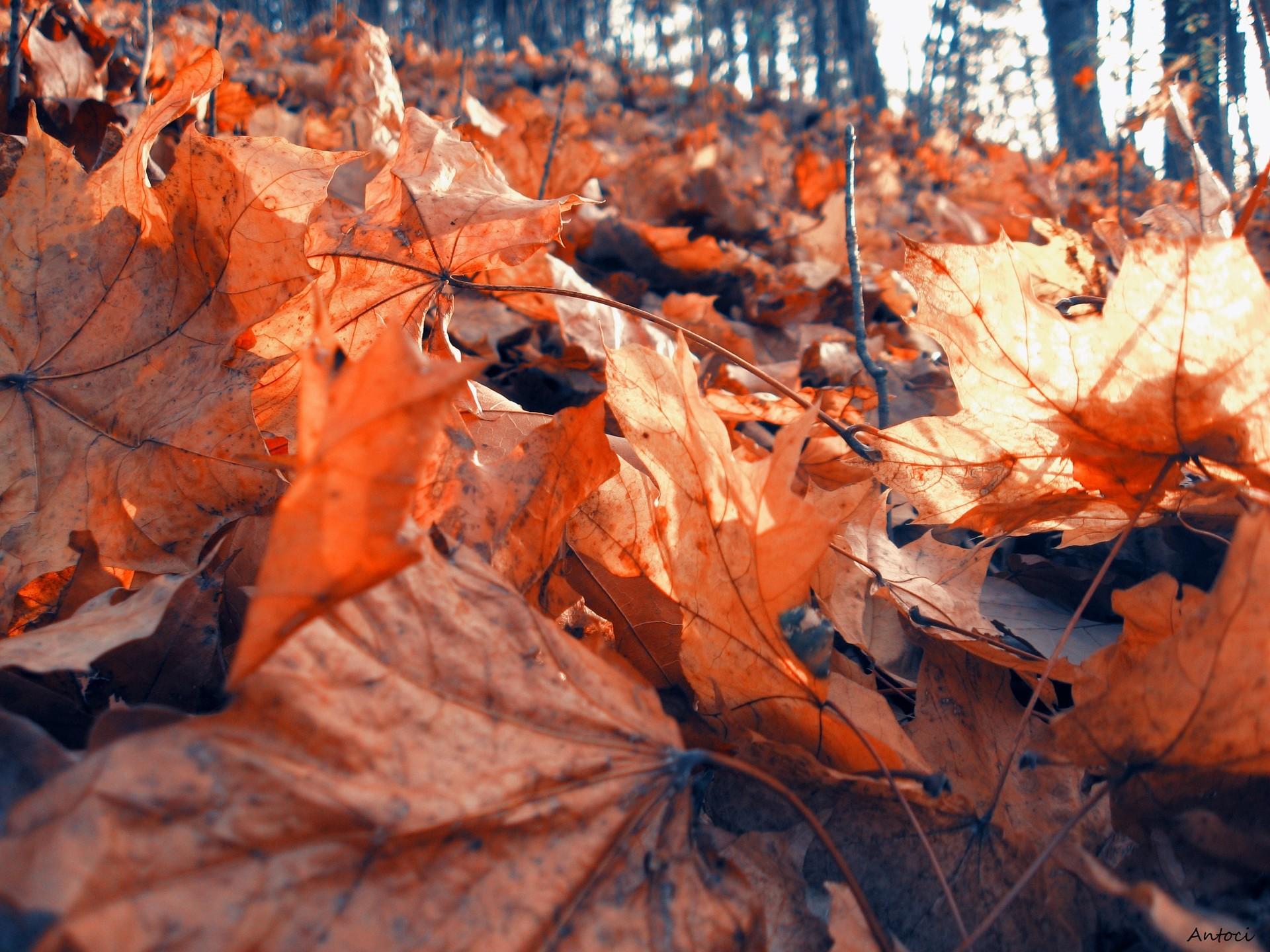 Осенний лиственный лес  № 3193563 загрузить