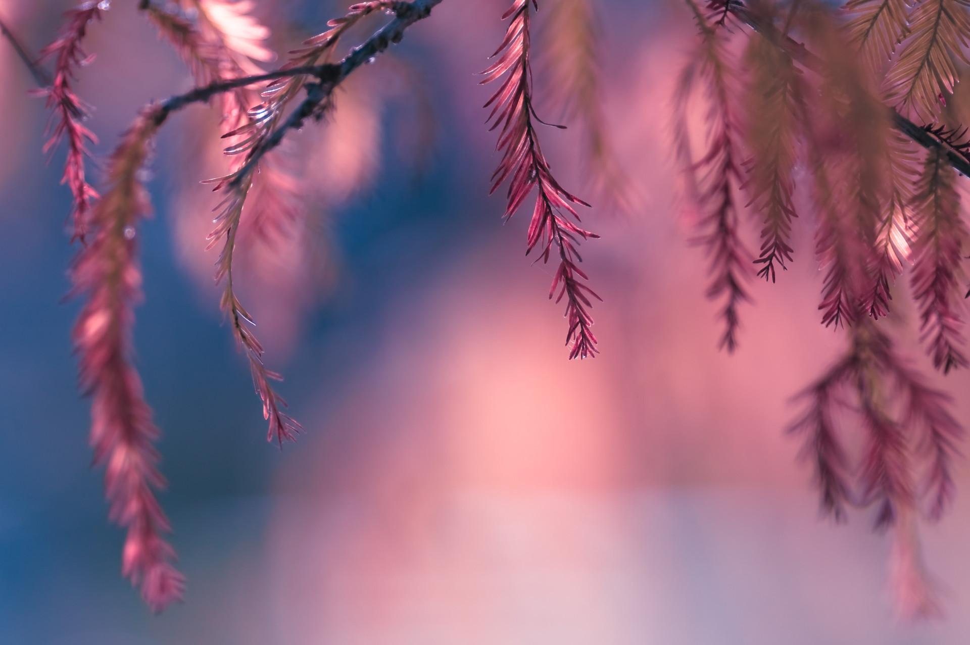 зима листья ветка природа бесплатно