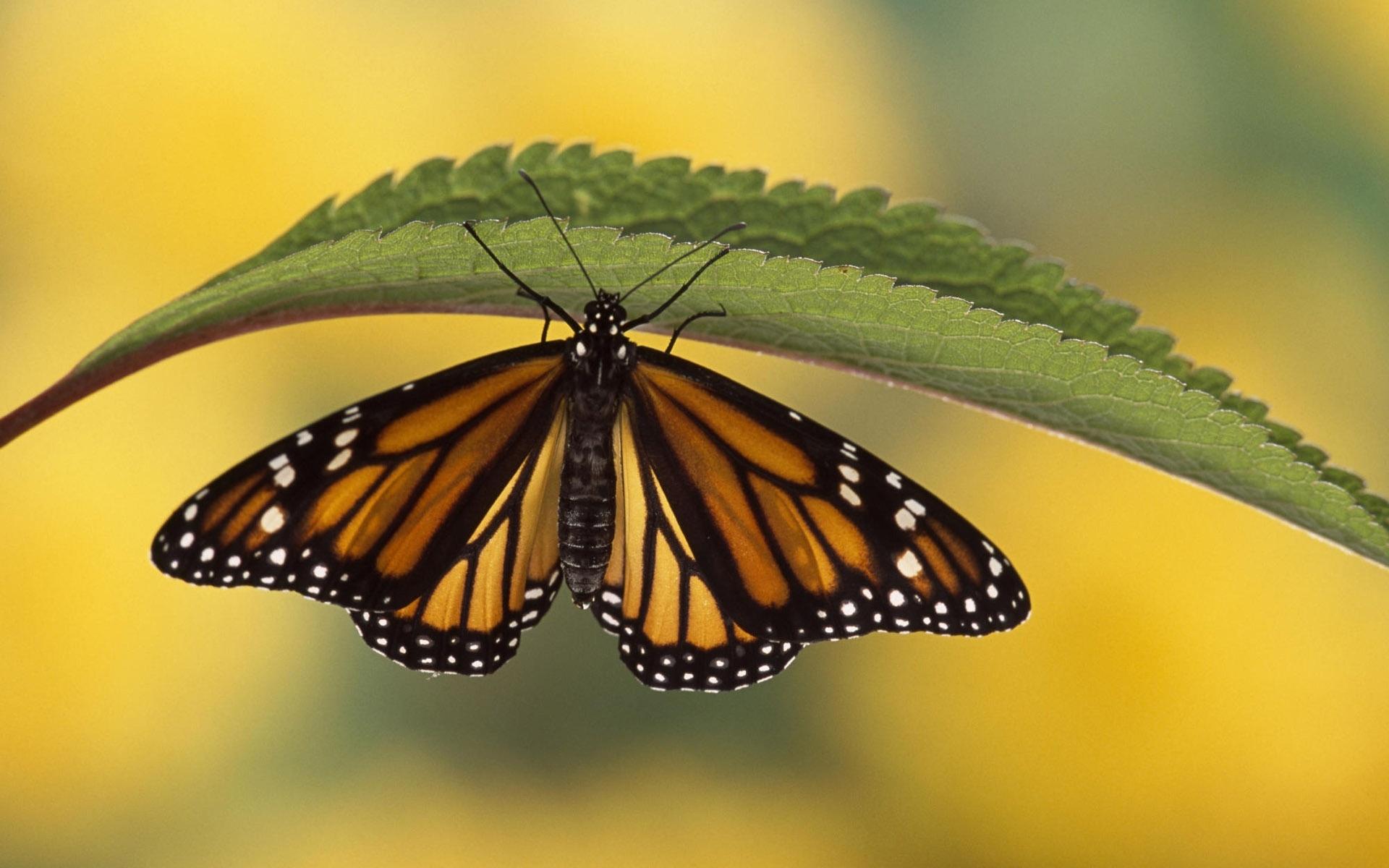 привлекали всегда, фото бабочек высокого качества реже, днем
