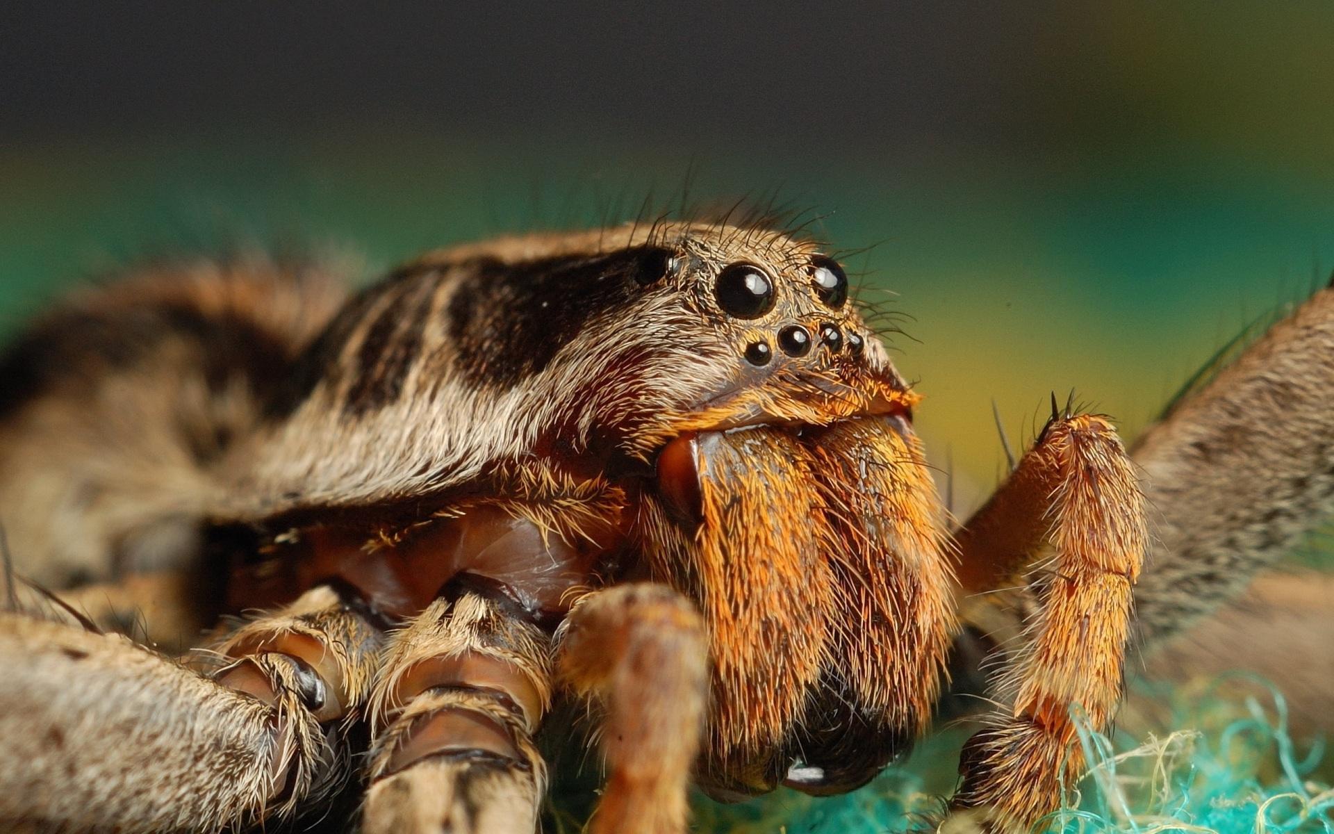 природа животные паук  № 2544182 загрузить