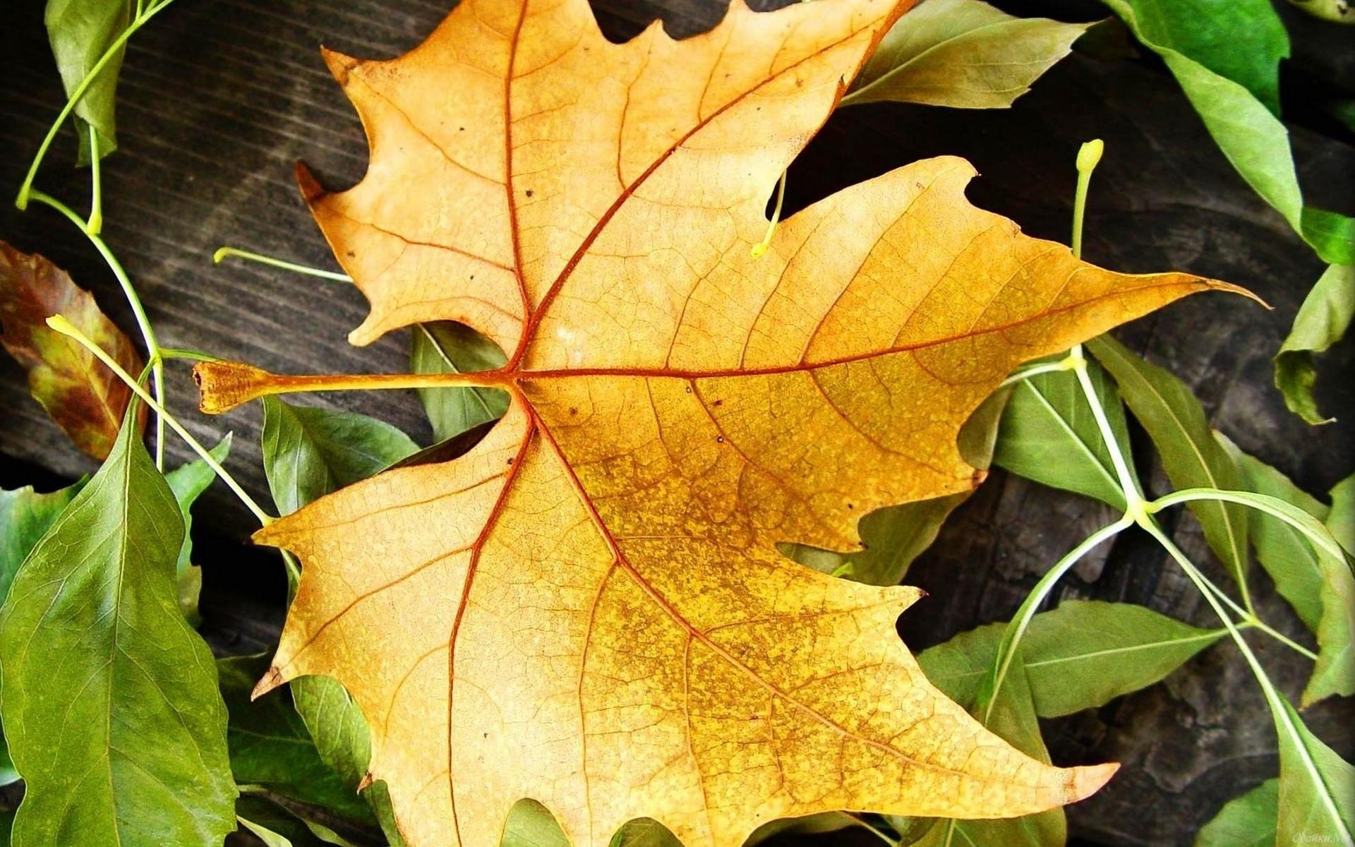 небо картинки осень листья большие современных условиях