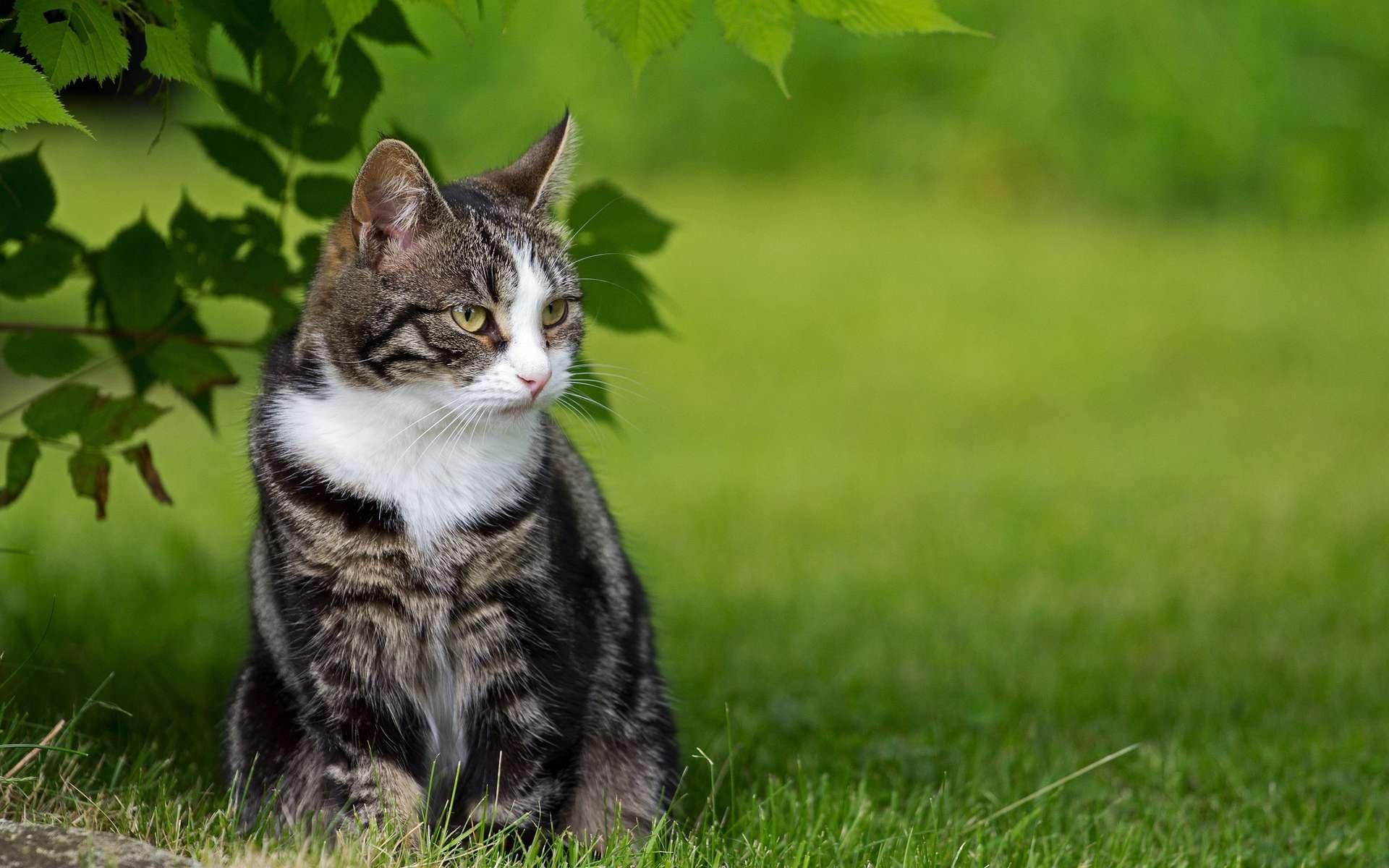 Котенок на траве  № 2959615  скачать