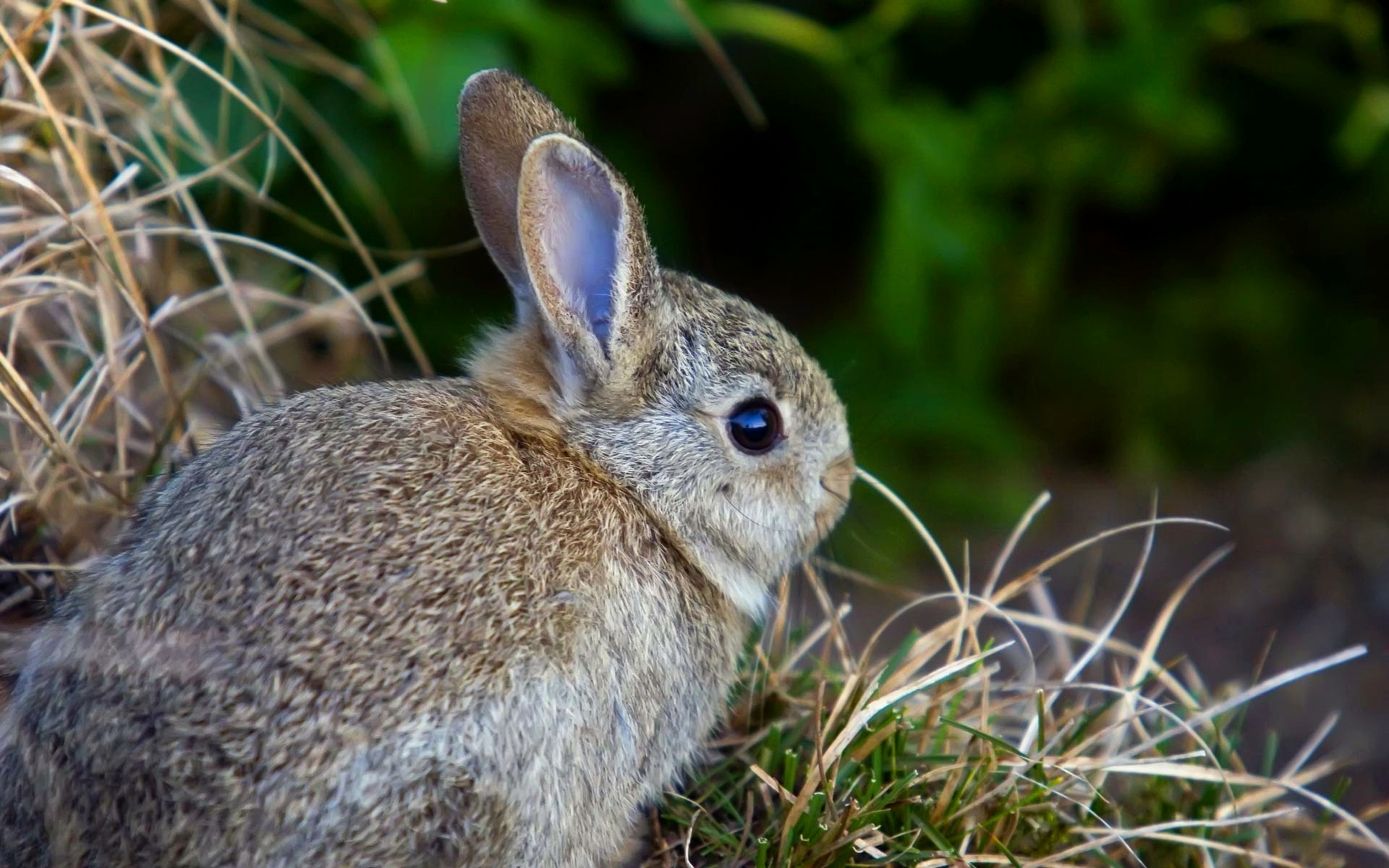 испуганный кролик  № 367610 без смс