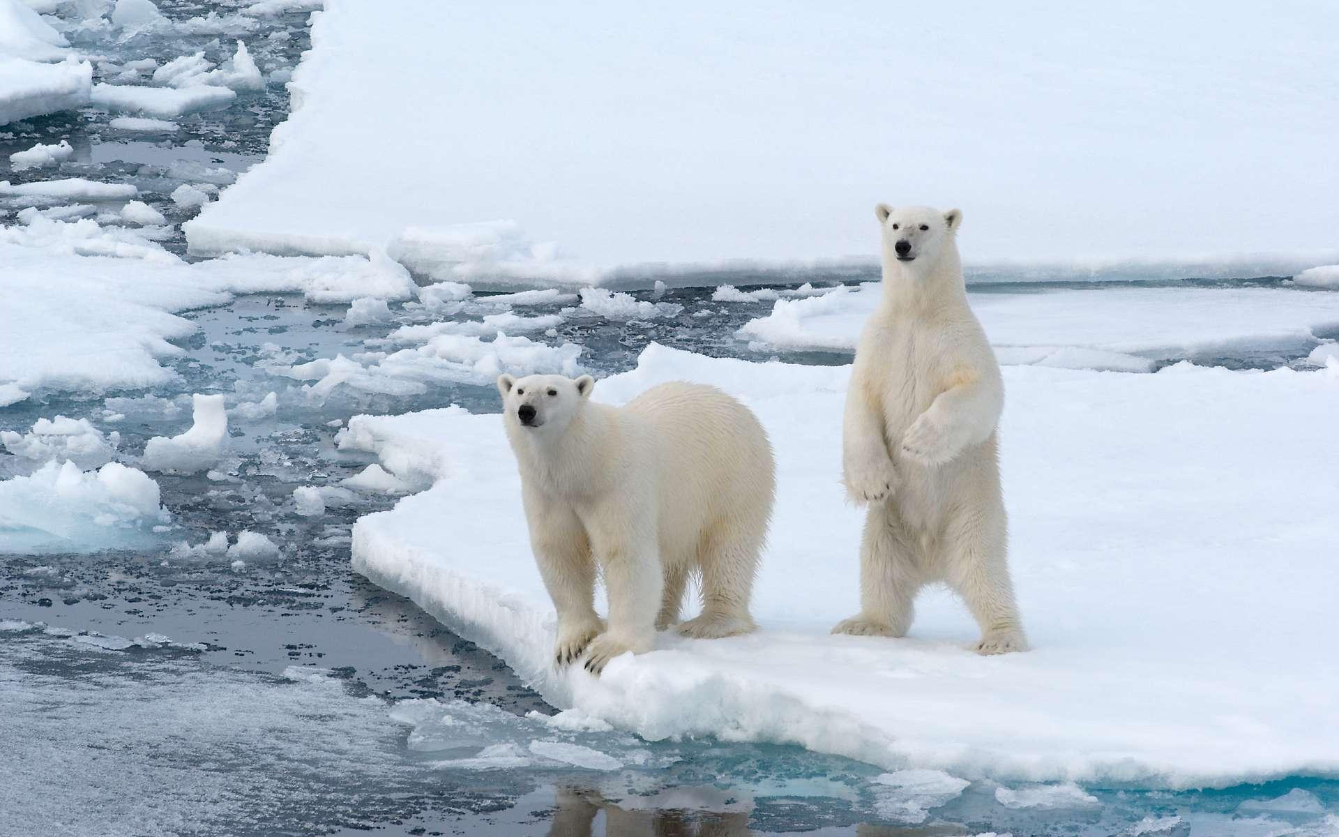 Восьмое, арктика открытки