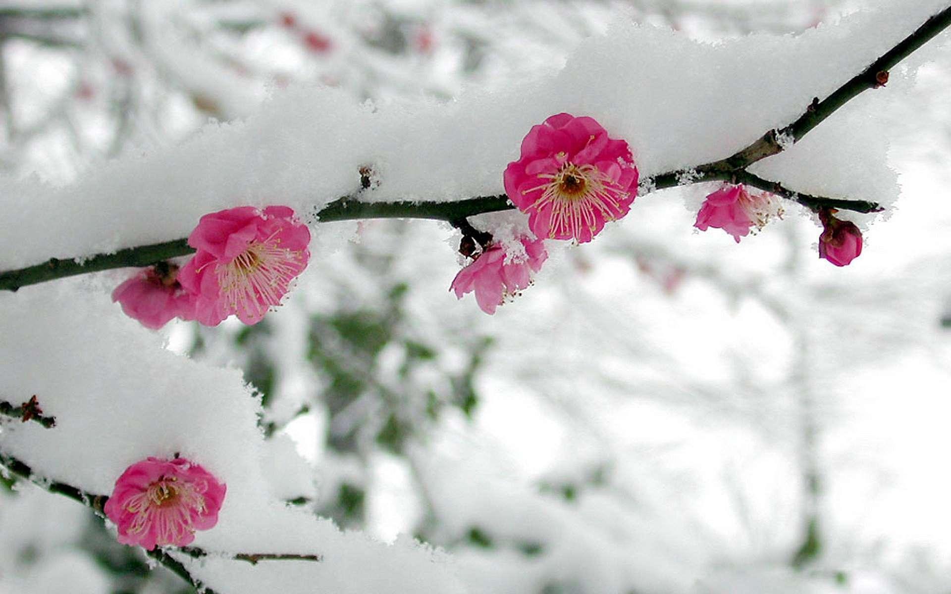 картинки на весь экран цветы под снегом волосы или борода