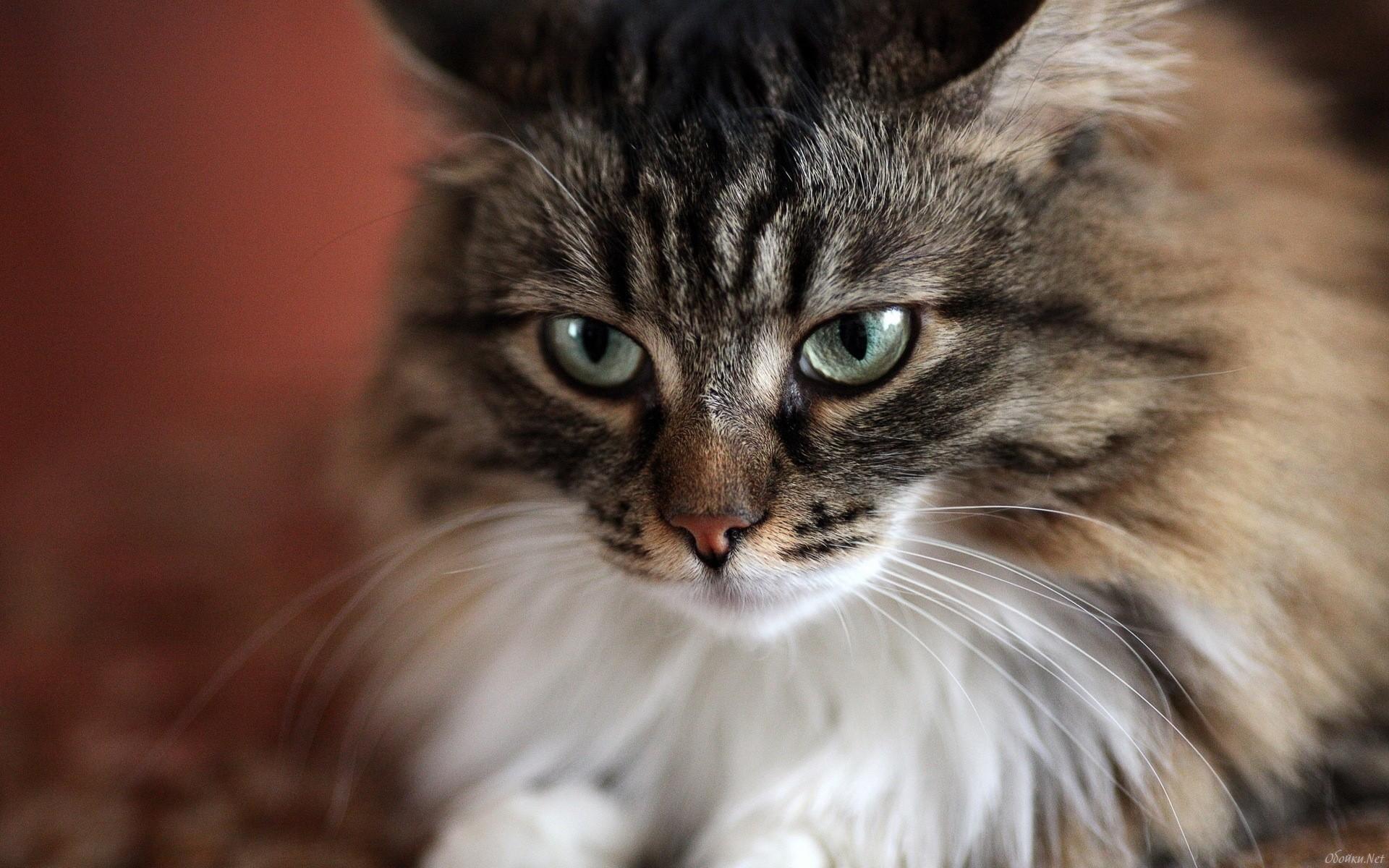 природа животные кот крупный план скачать