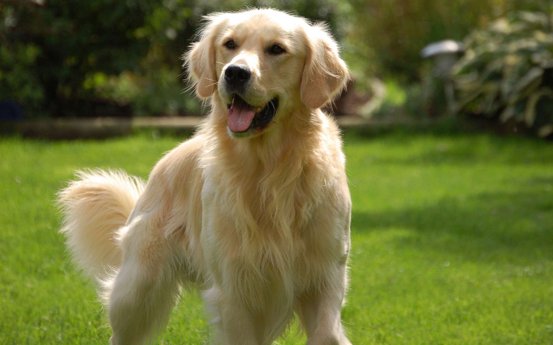 imagen de perro - HD1920×1200