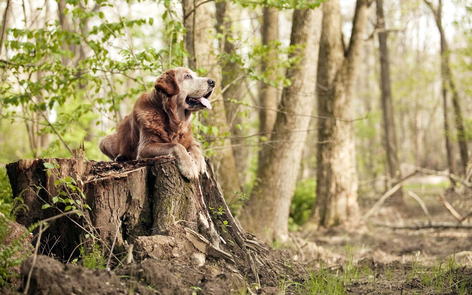 девушка пень лес загрузить
