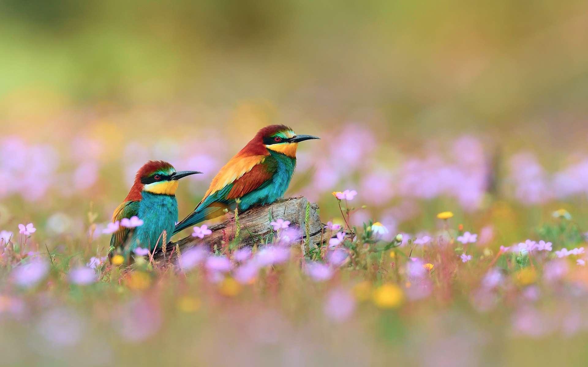 природа животные птица nature animals bird  № 2036854 загрузить