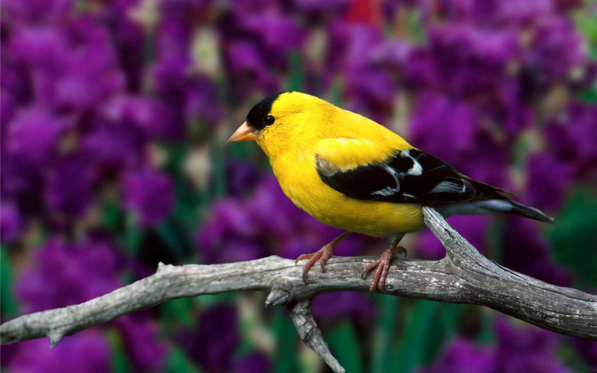 Про любовь, картинки о птицах