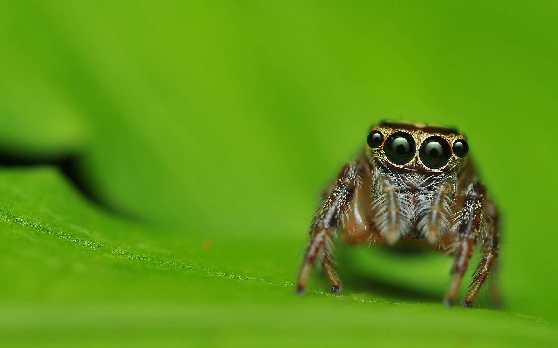 природа животные паук  № 2544282 без смс