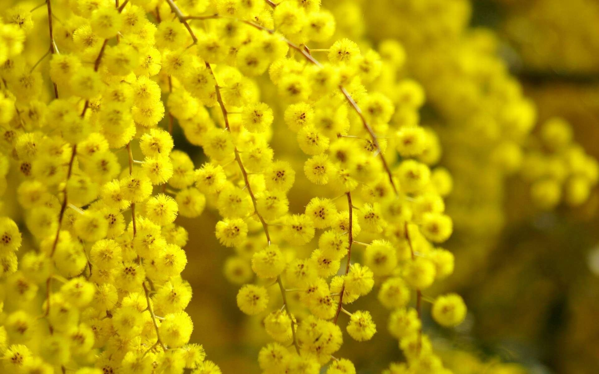 Желтый распустившийся цветок  № 731661 без смс