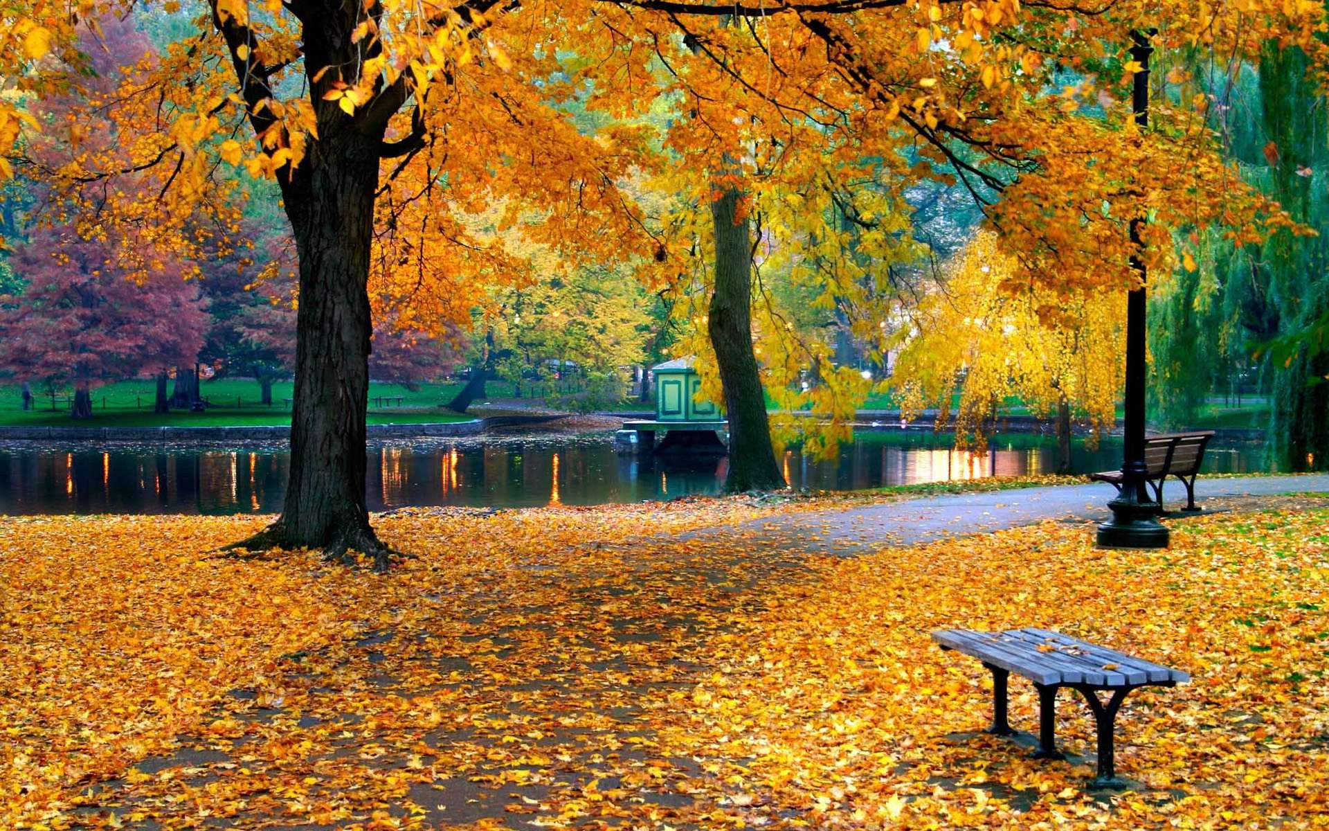 Скачать обои парк листья скамейка